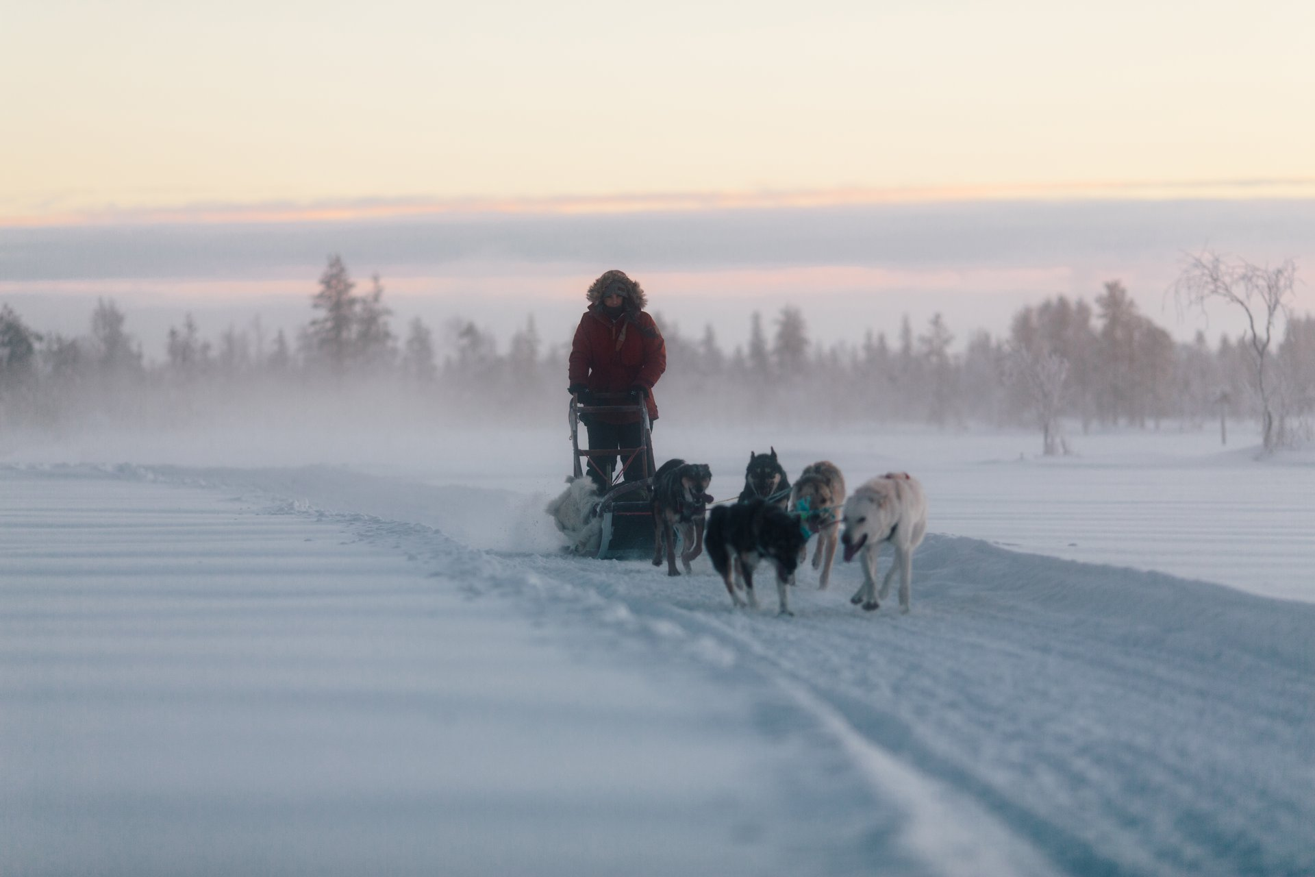 Best time to see Dog Sledding in Finland 2020