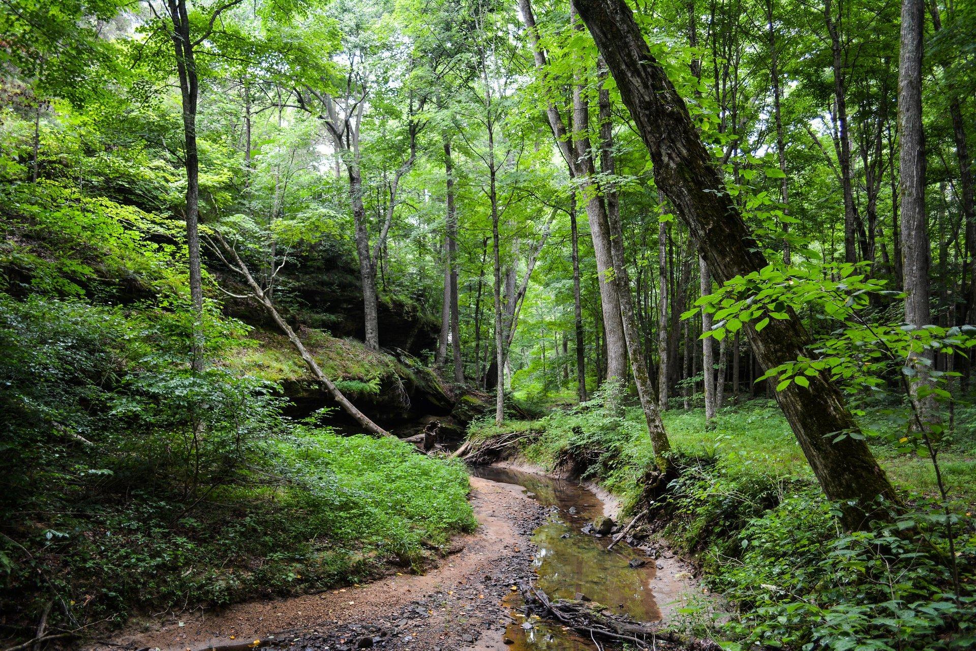 Rim Rock Trail in Shawnee National Forest, Illinois 2020