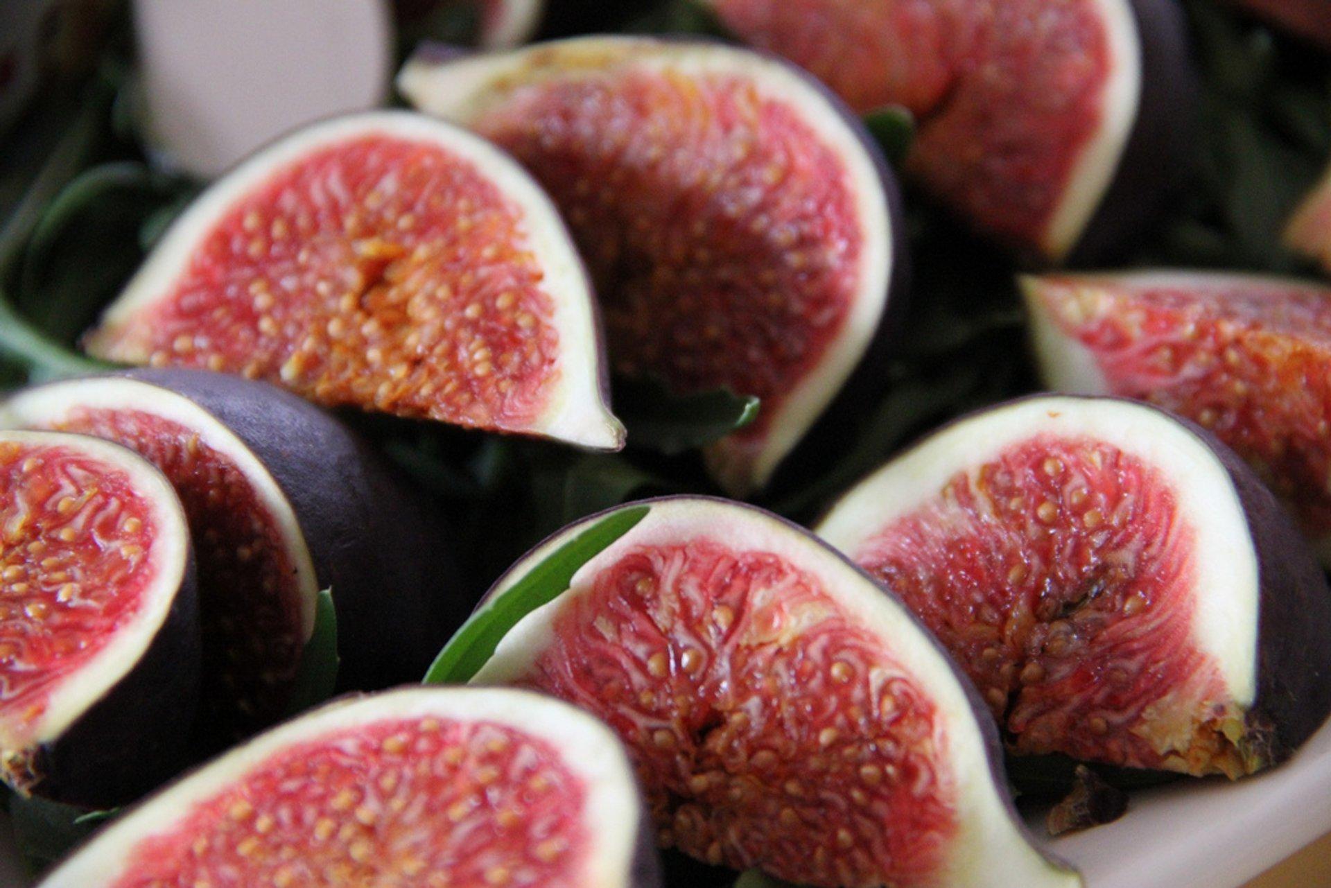 Fig Season in Ibiza - Best Season 2020