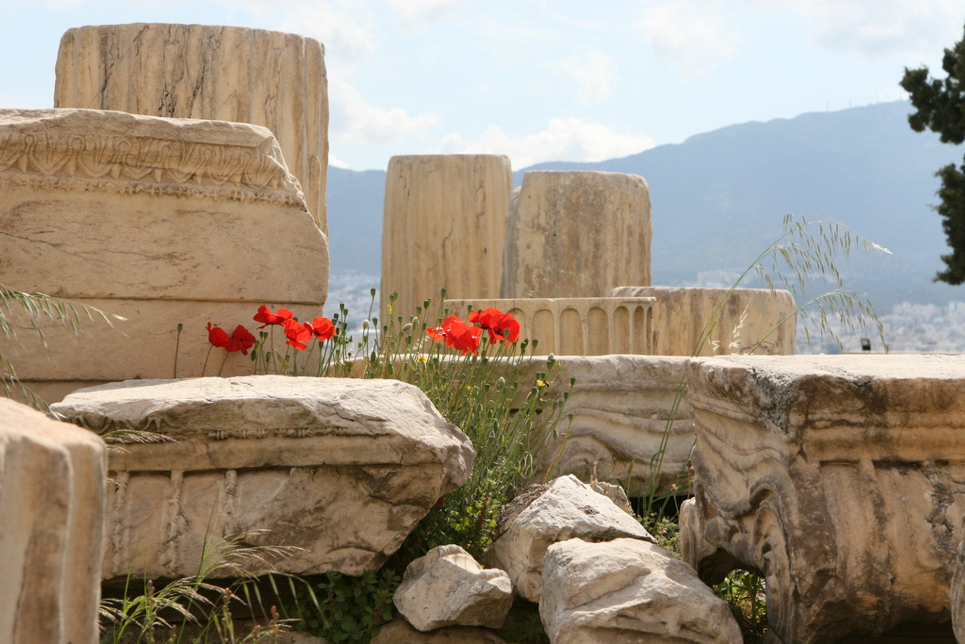 Wild Poppies at the Acropolis in Athens - Best Time