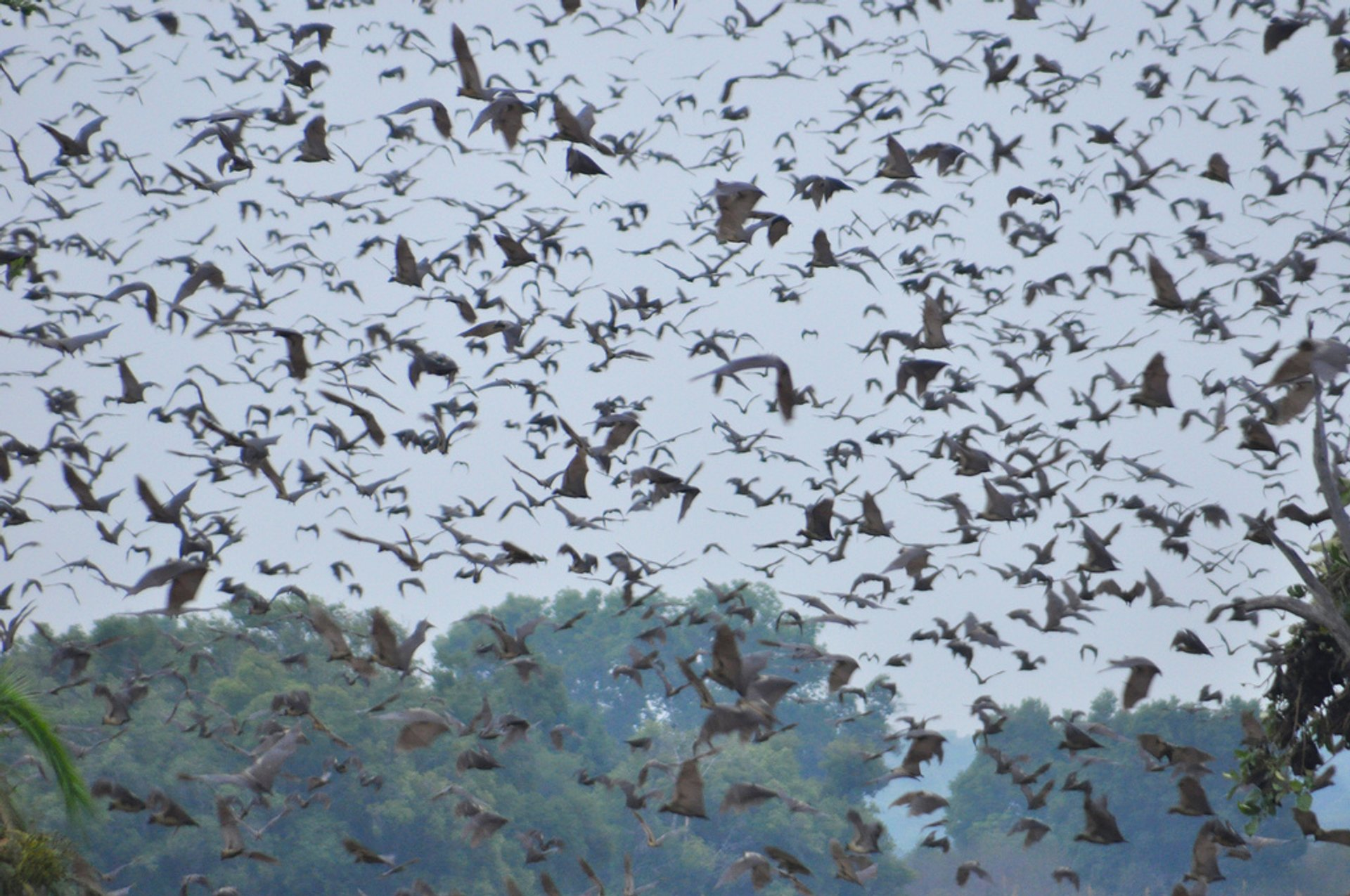Best time to see Bat Migration in Zambia 2020