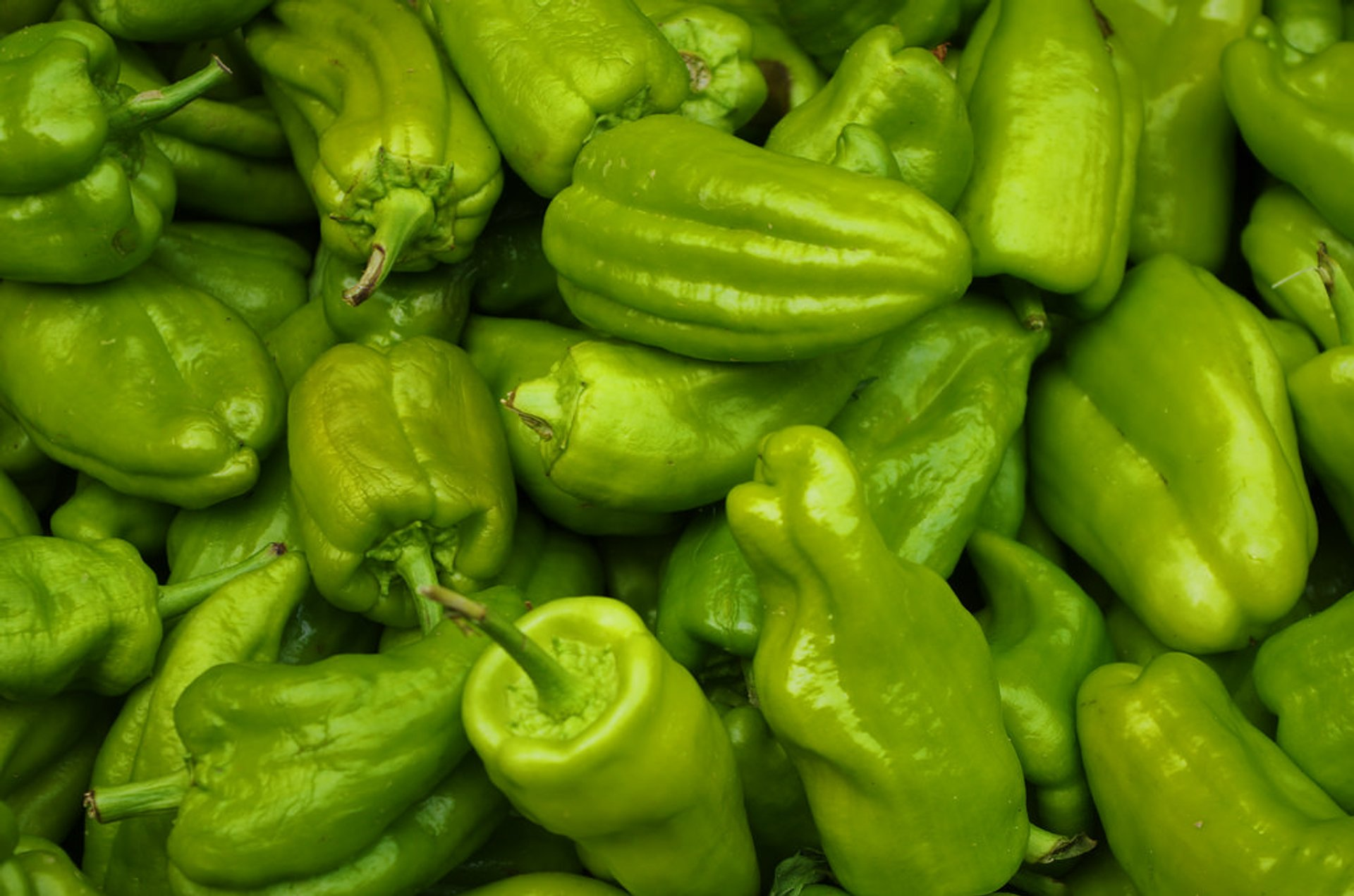 Padrón Peppers (Pimientos de Padrón) in Spain - Best Season 2019