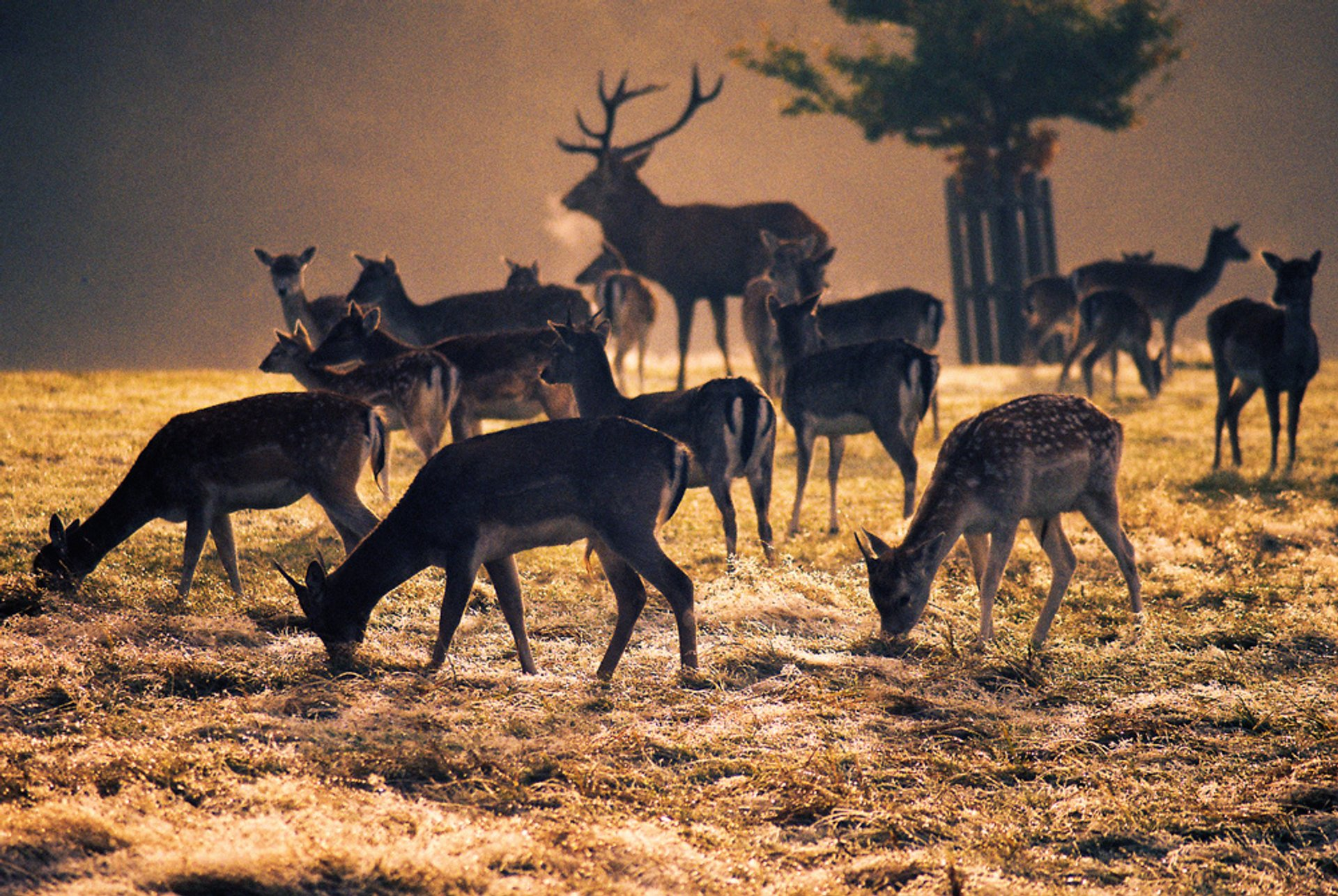 Hunting Season & Game Meat in London 2019 - Best Time