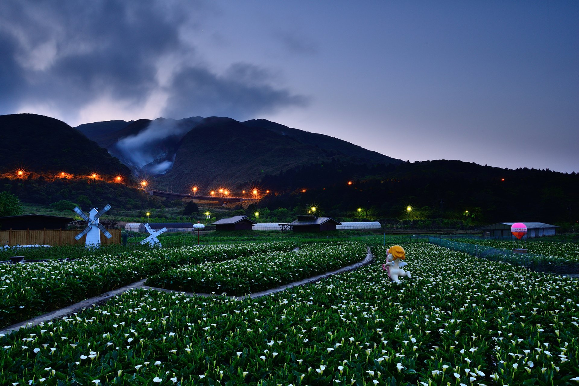 Calla Lily Festival in Taiwan - Best Season 2019