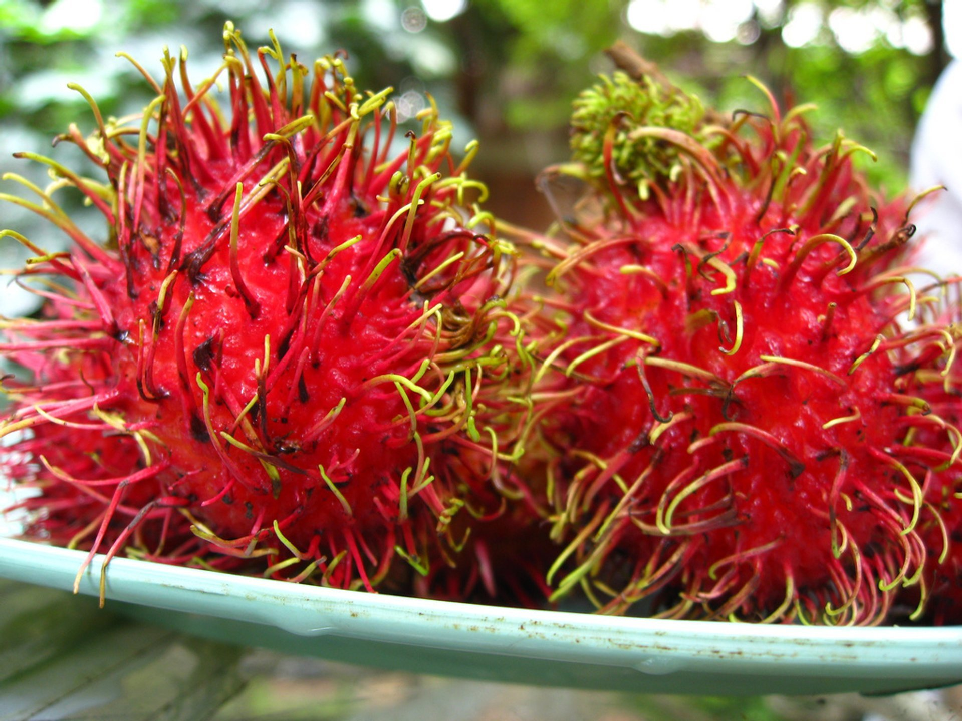 Rambutan Season in Thailand 2019 - Best Time