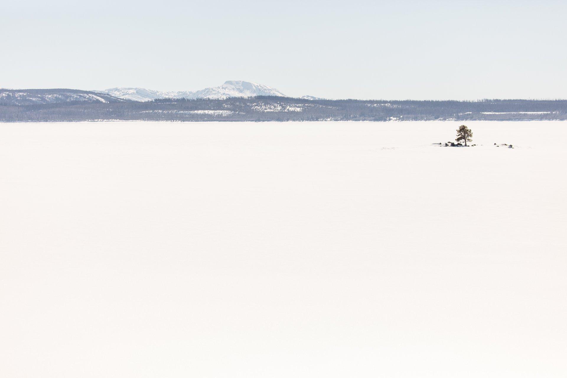 Lone tree on frozen Yellowstone Lake 2020