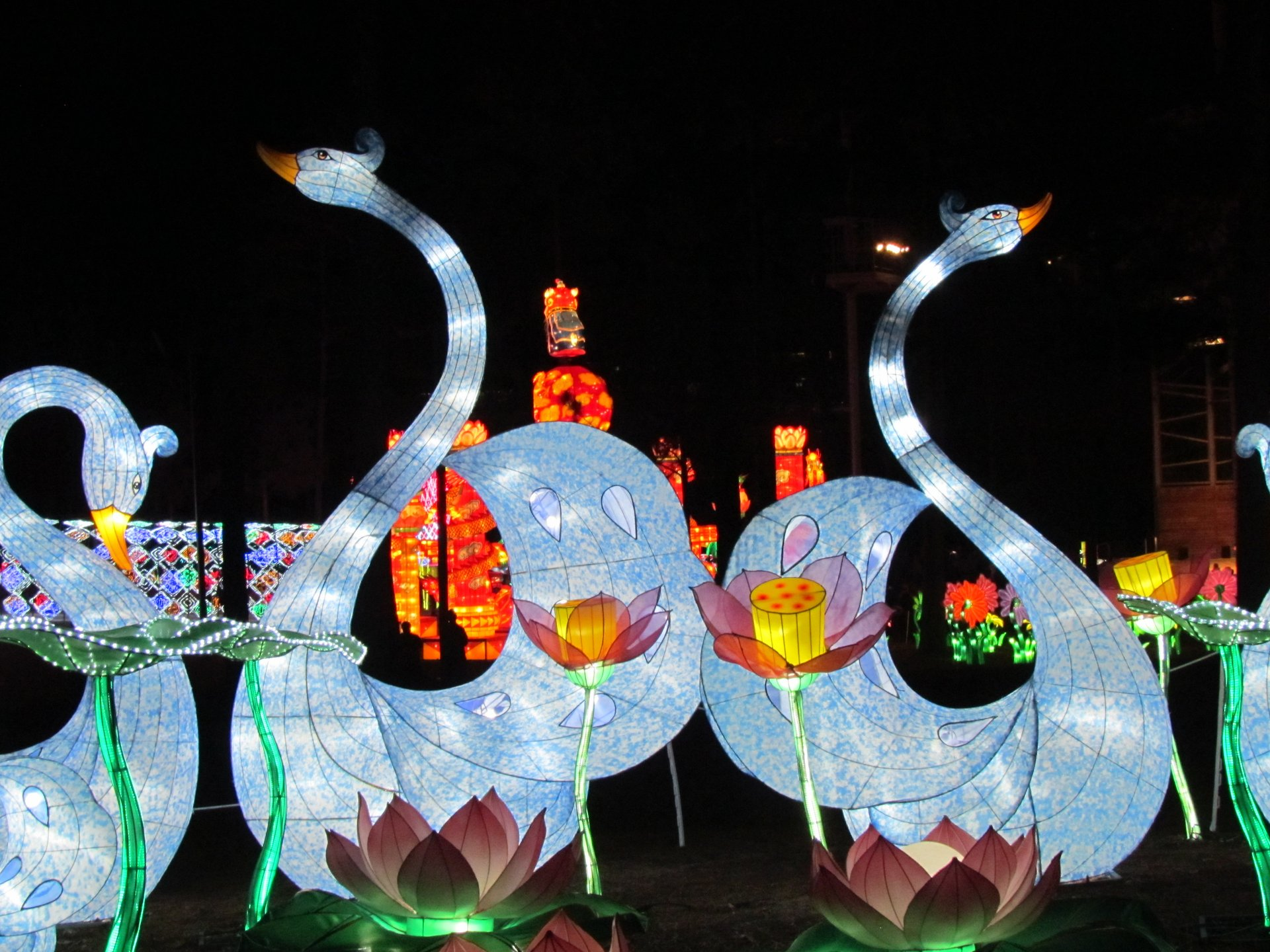 Crystal swans during NC Chinese Lantern Festival in Cary 2020