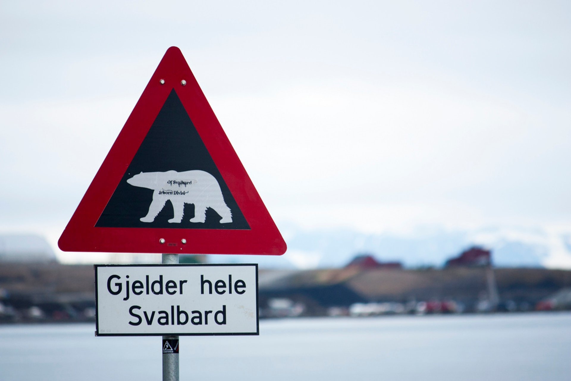 Polar bear alert, Svalbard 2020