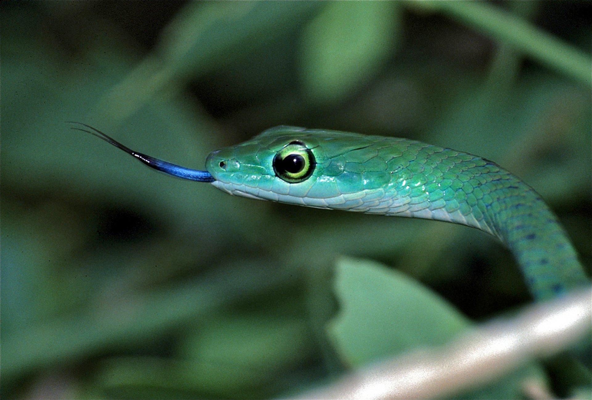 Snake Safari in Kenya 2020 - Best Time