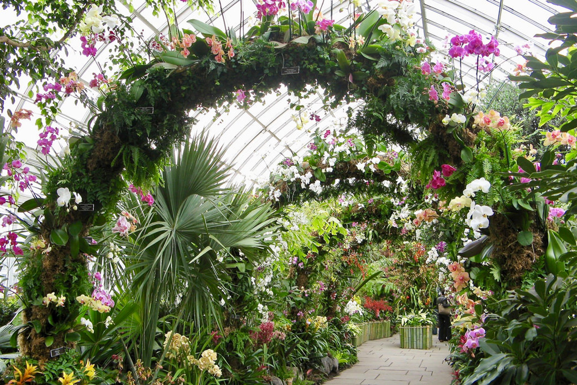 Nybg orchid show 2019 in new york dates map - New york botanical garden directions ...