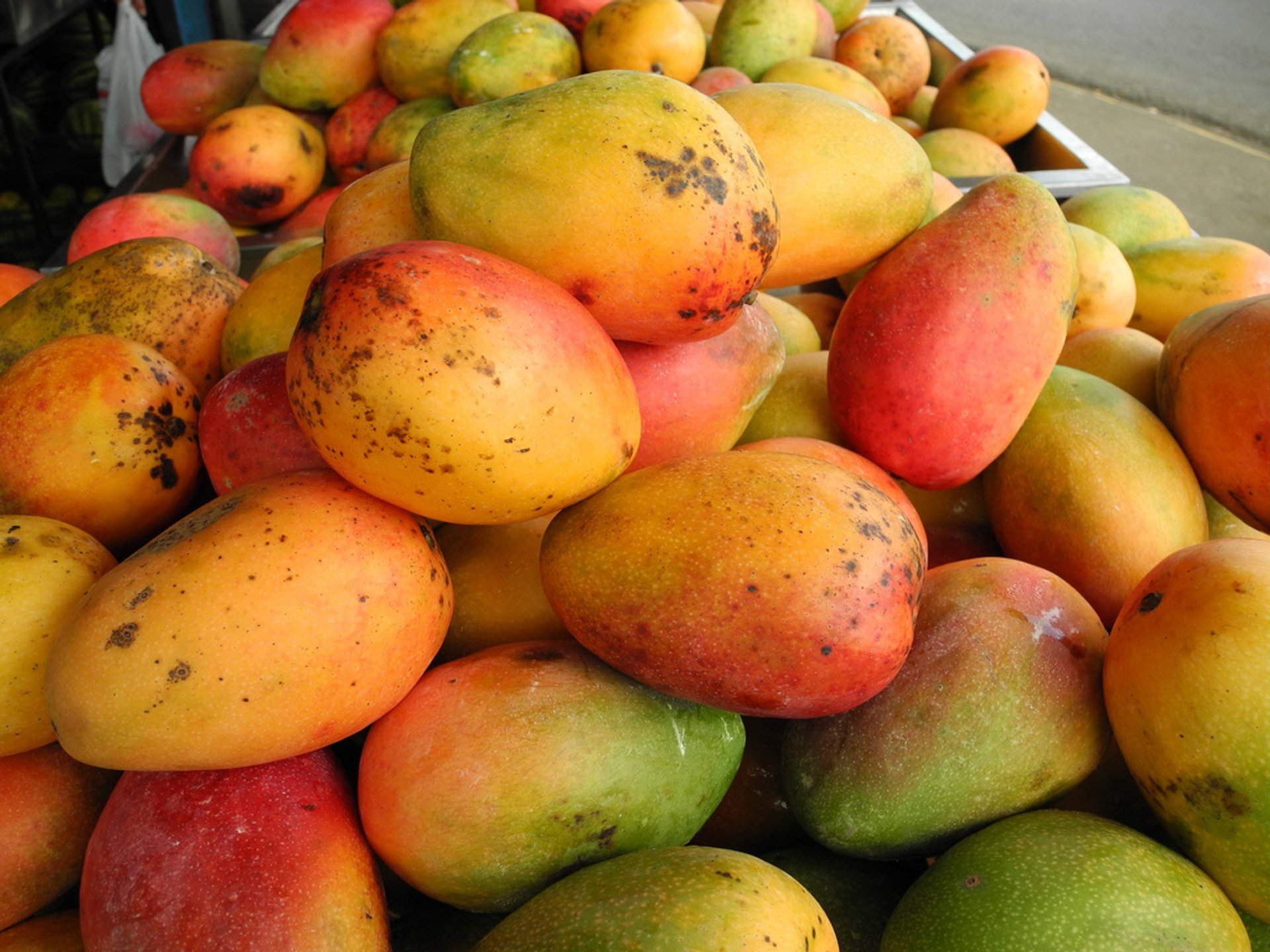 Mango Season in Costa Rica 2020 - Best Time