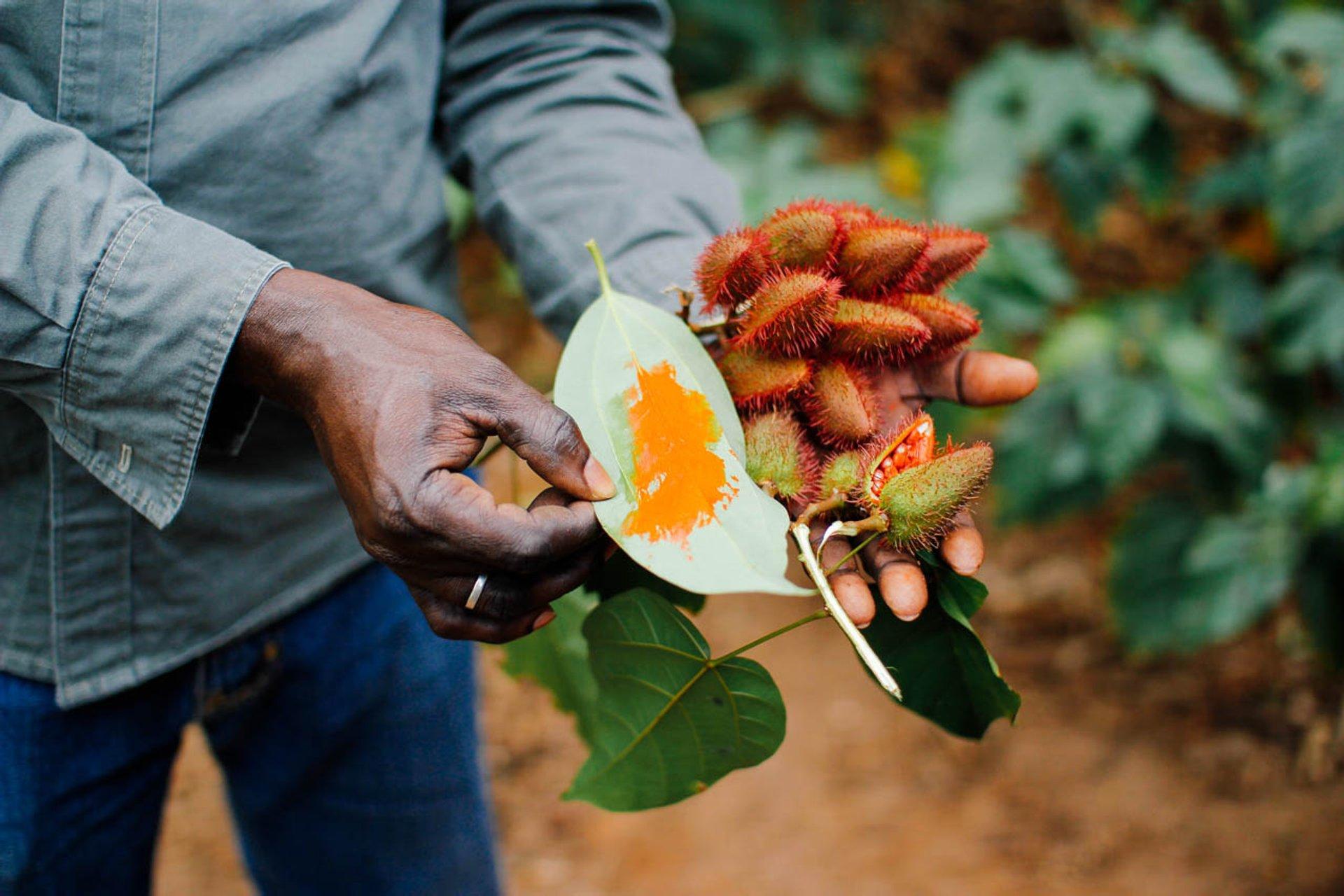 Spice Harvest and Tours in Zanzibar - Best Season 2020