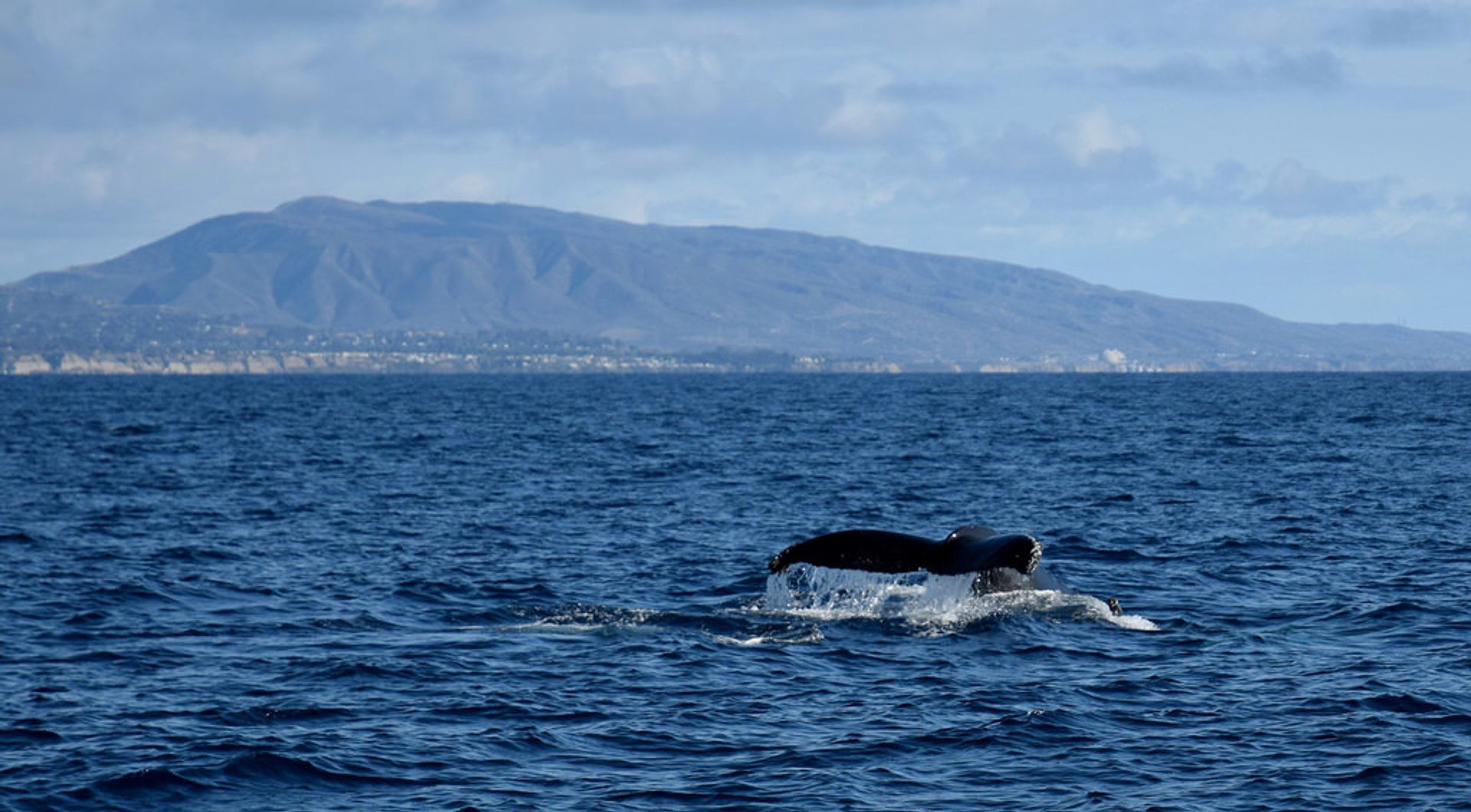 Best time for Whale and Dolphin Watching  in Los Angeles 2020