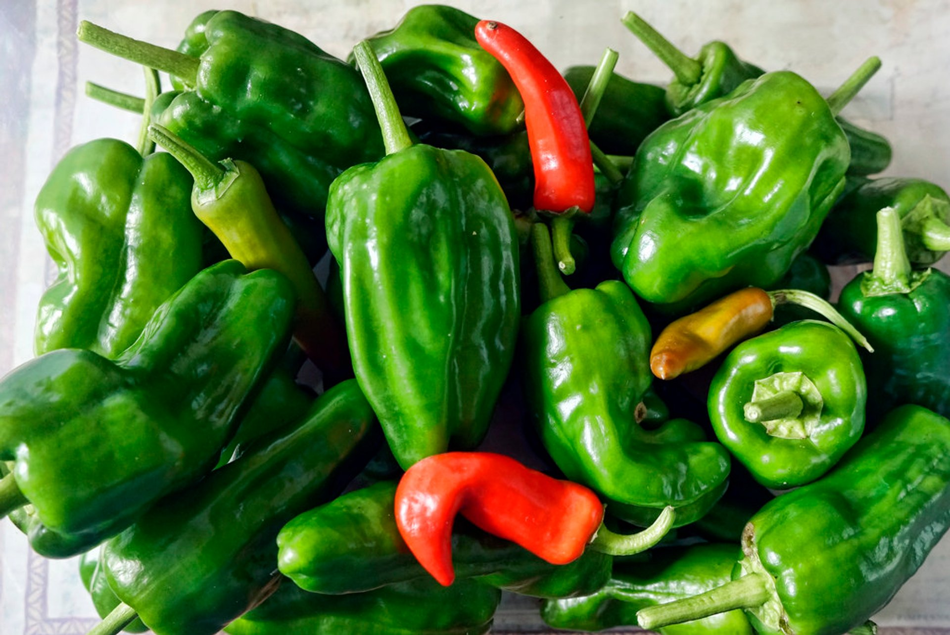 Best time to see Padrón Peppers (Pimientos de Padrón) in Spain 2019
