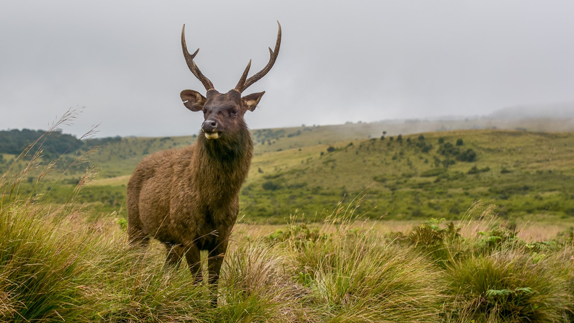 Best time to see Horton Plains in Sri Lanka