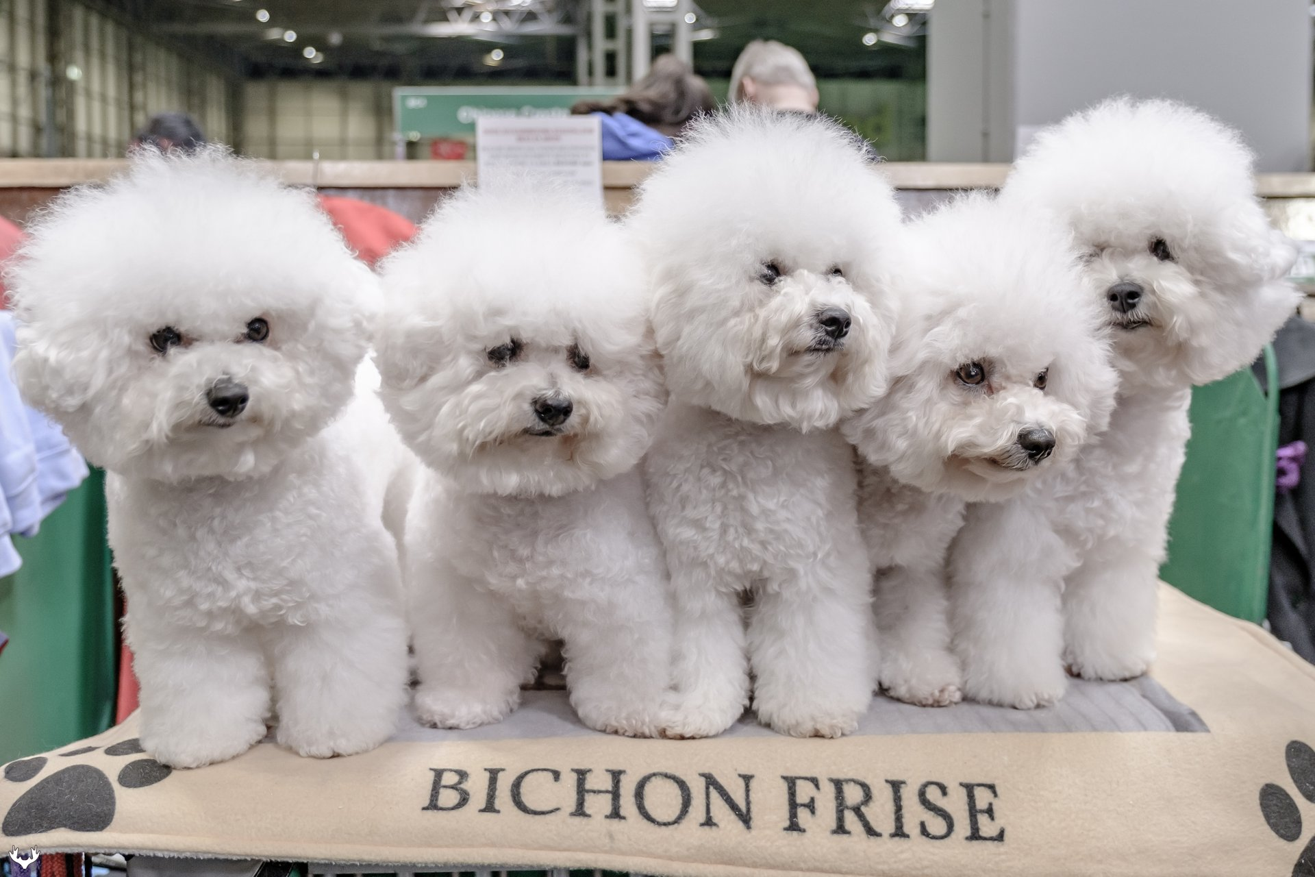 Crufts in England 2020 - Best Time