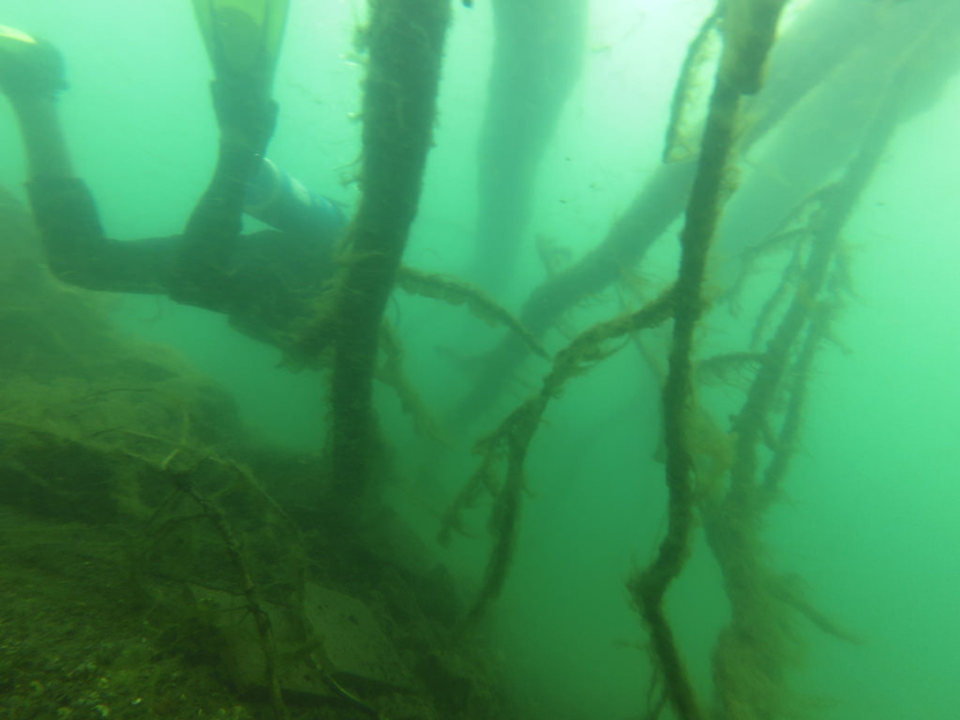 Making a way through some sunken tree branches in the Lake Atitlán 2020