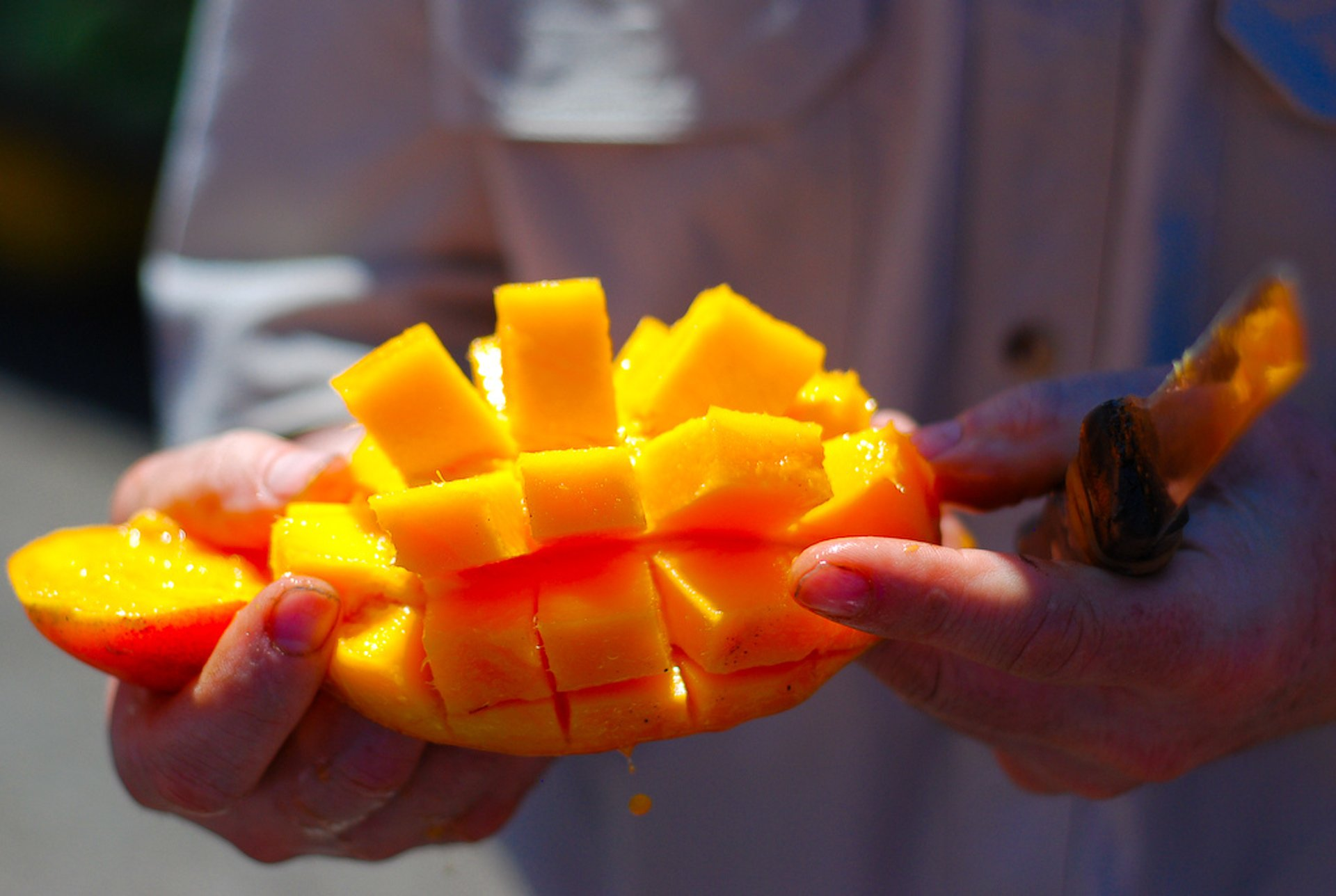 Best time to see Mango Season in Costa Rica 2020
