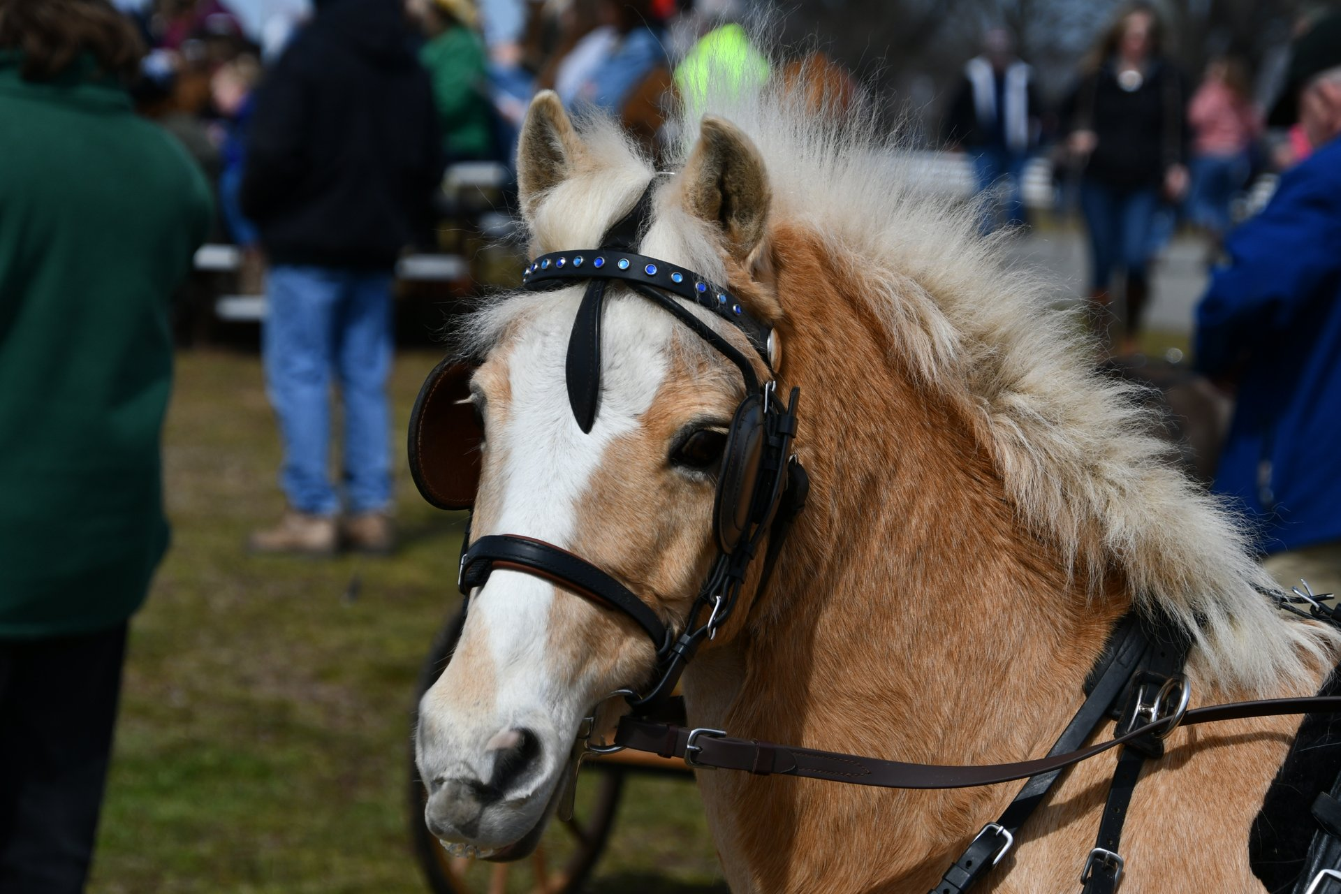 Best time for Virginia Horse Festival in Virginia 2020