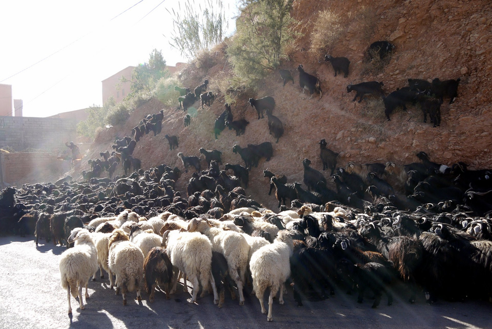 Transhumance with Nomads in Morocco - Best Season 2020