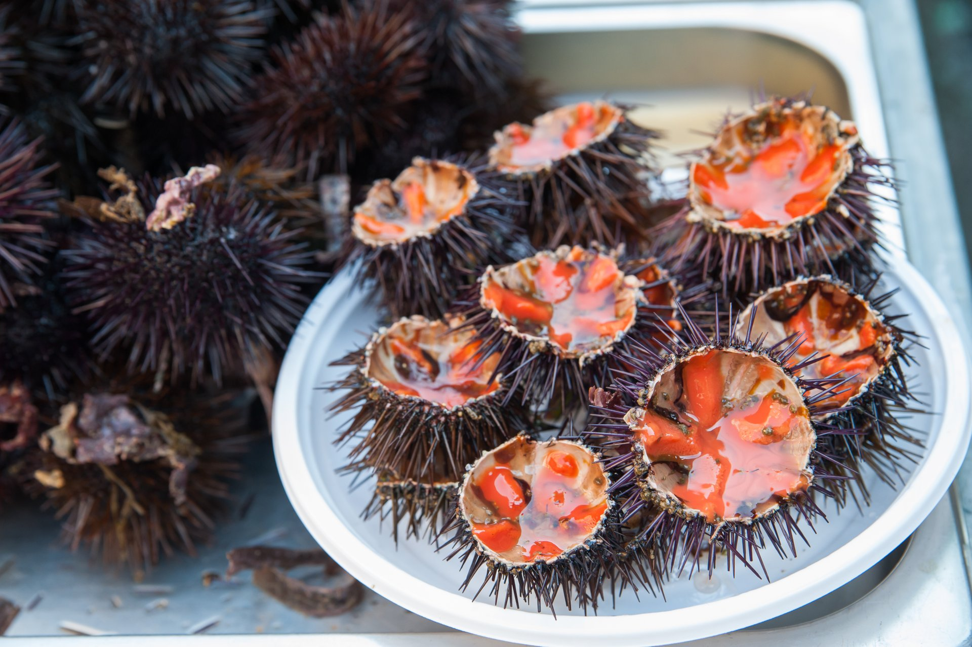Sea Urchins in Sicily - Best Time
