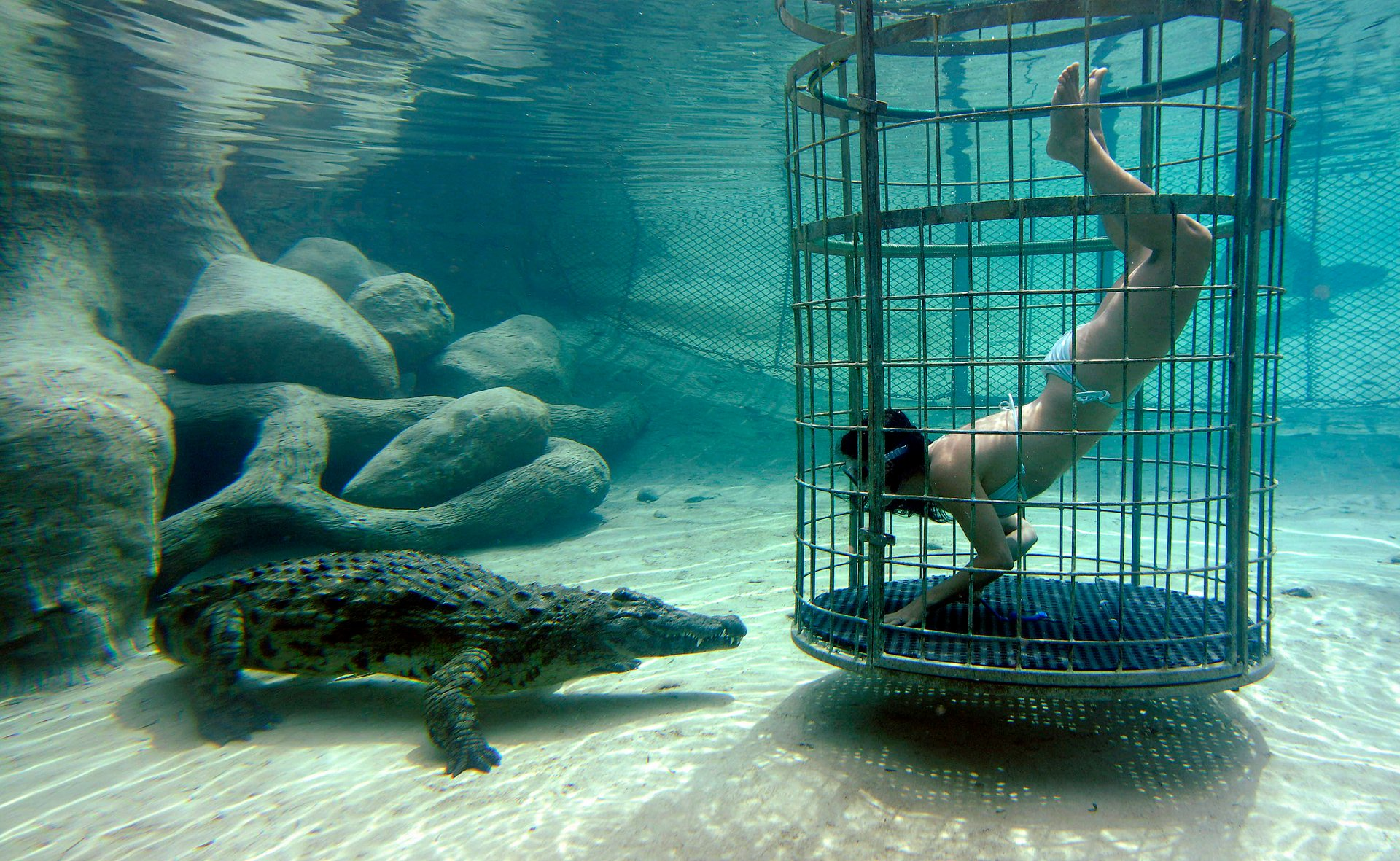 Croc Cage Diving in South Africa 2020 - Best Time