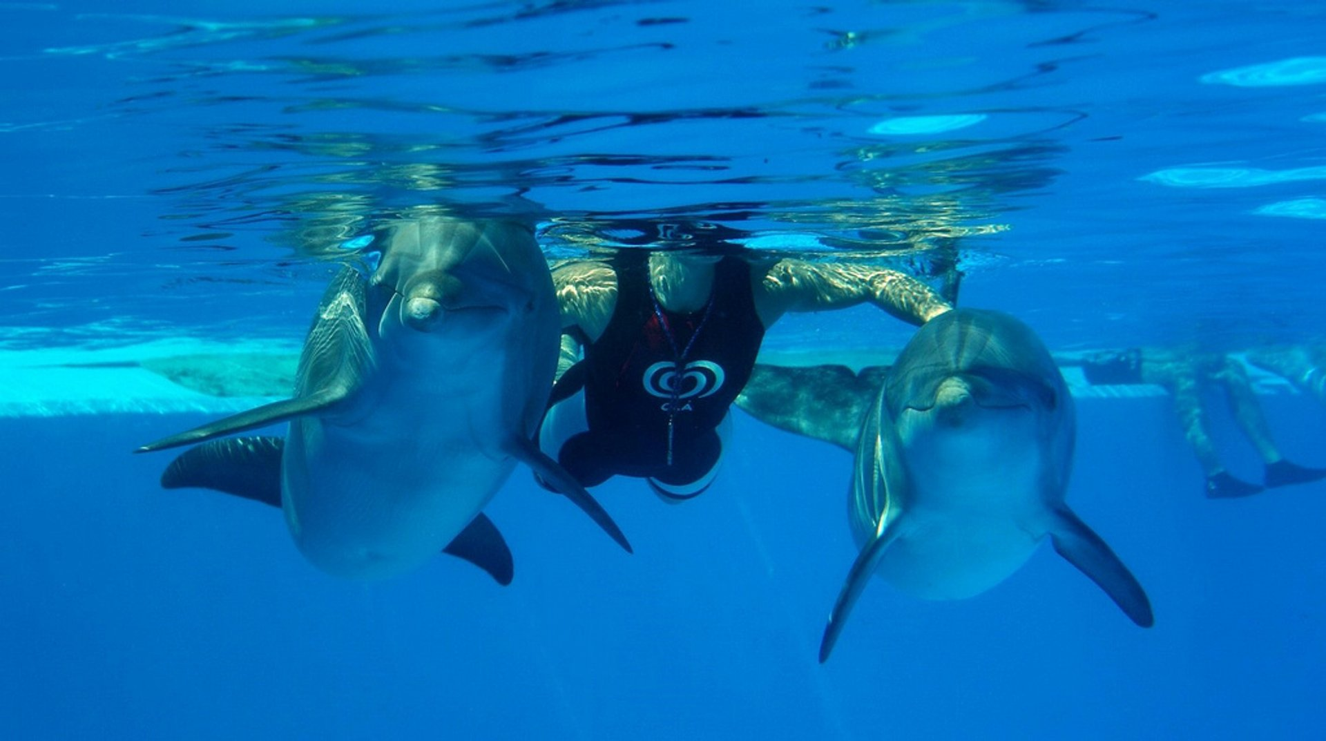 Swimming with Dolphins in Portugal 2020 - Best Time