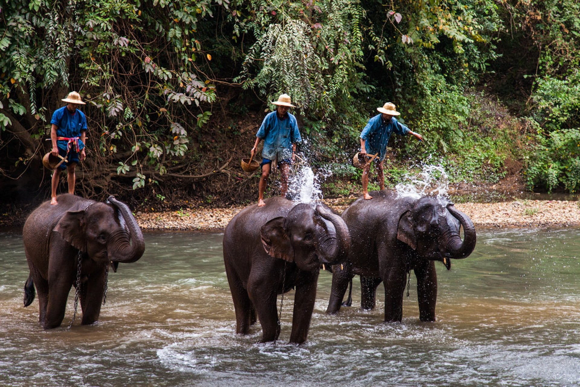 Wash an Elephant in Cambodia 2020 - Best Time