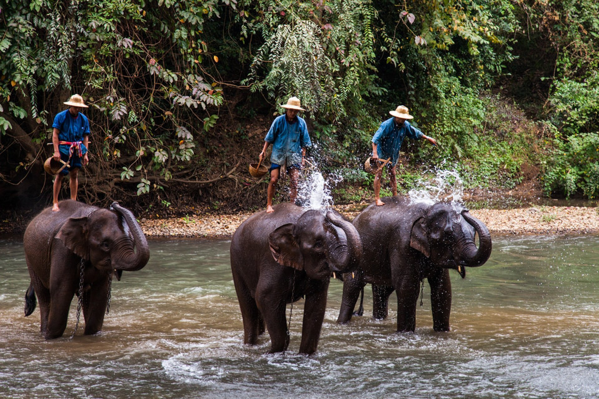 Wash an Elephant in Cambodia - Best Time