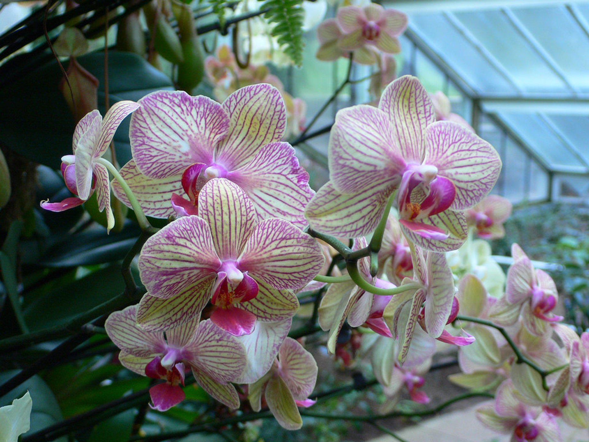 Best time to see Orchids Festival at Kew Gardens in London 2020