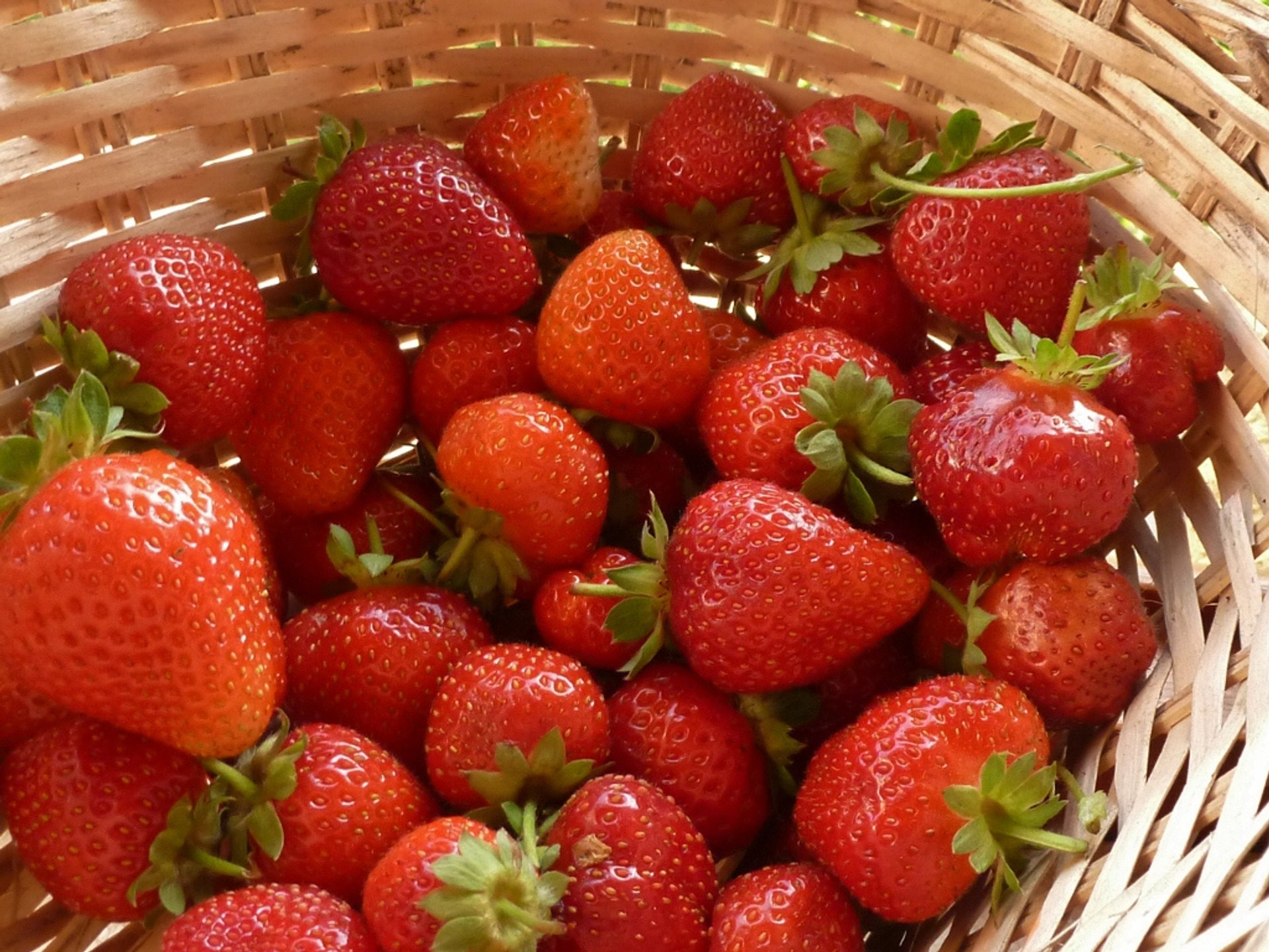 Strawberry Season in Italy - Best Season 2019
