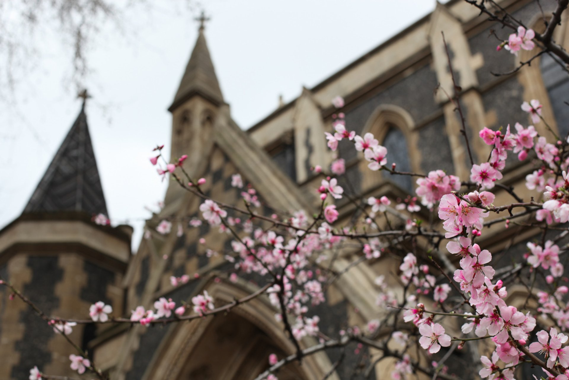 Cherry Blossom in London 2020 - Best Time