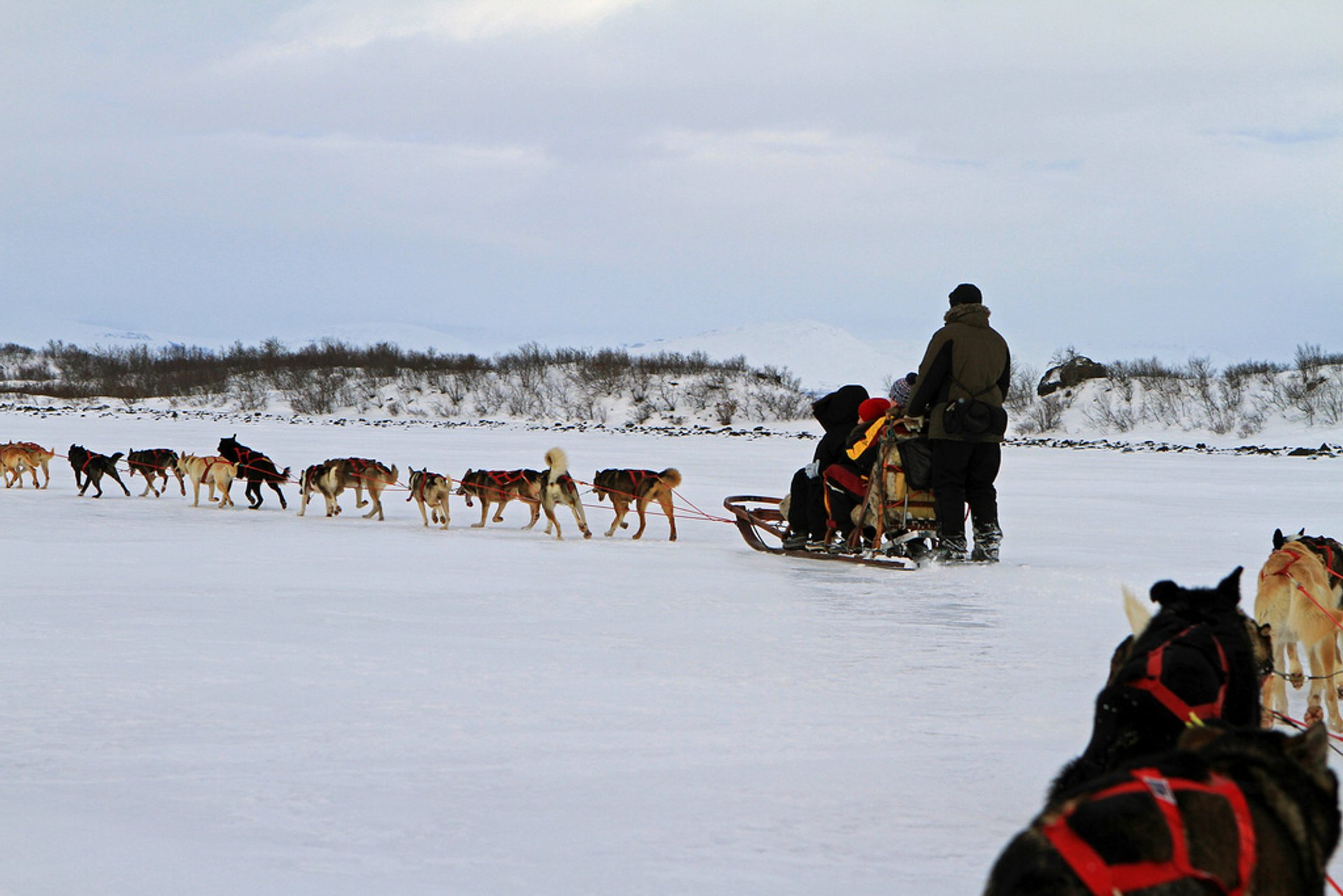 Dogsledding in Swedish Lapland in Sweden - Best Season 2020