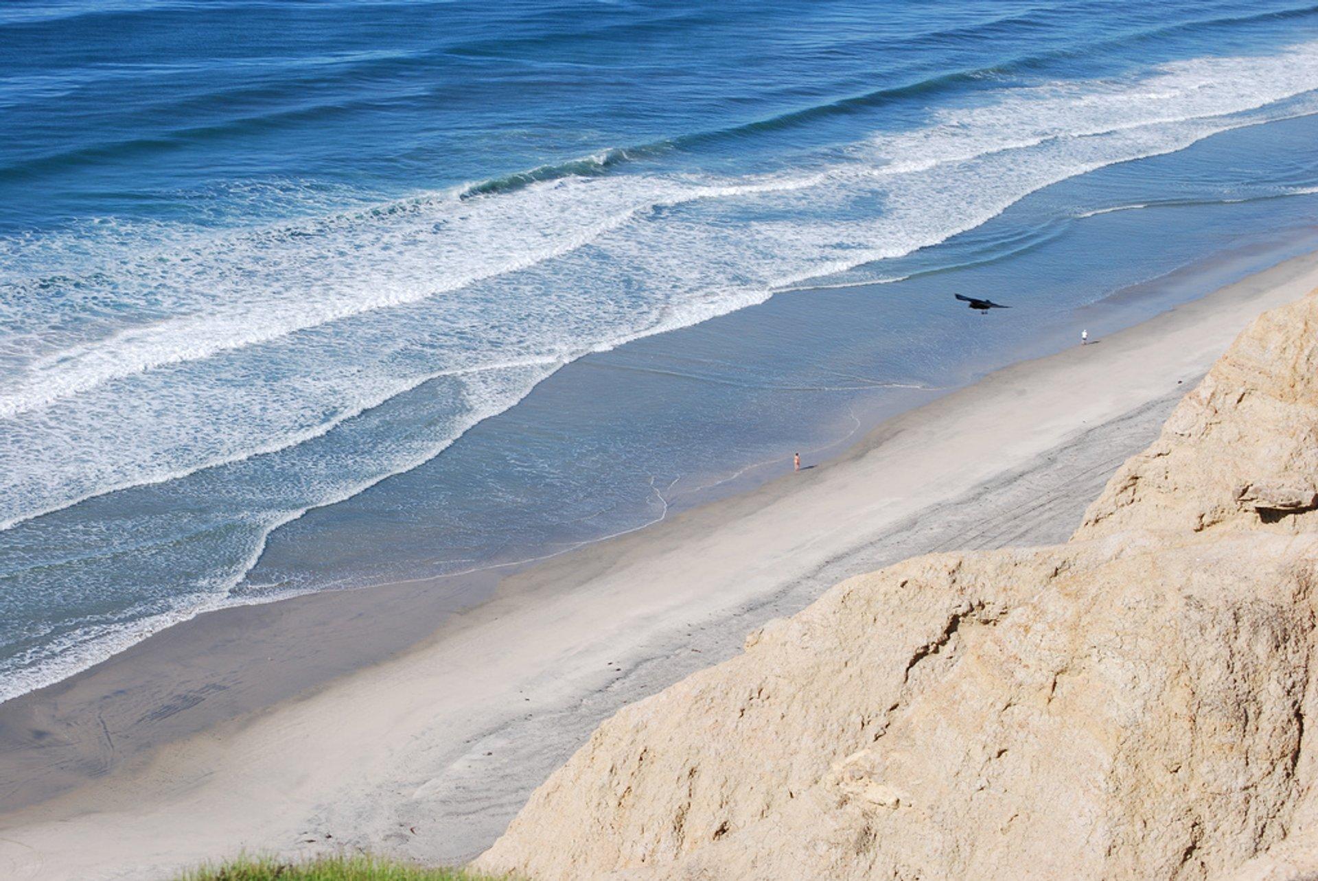 Black's Beach 2020