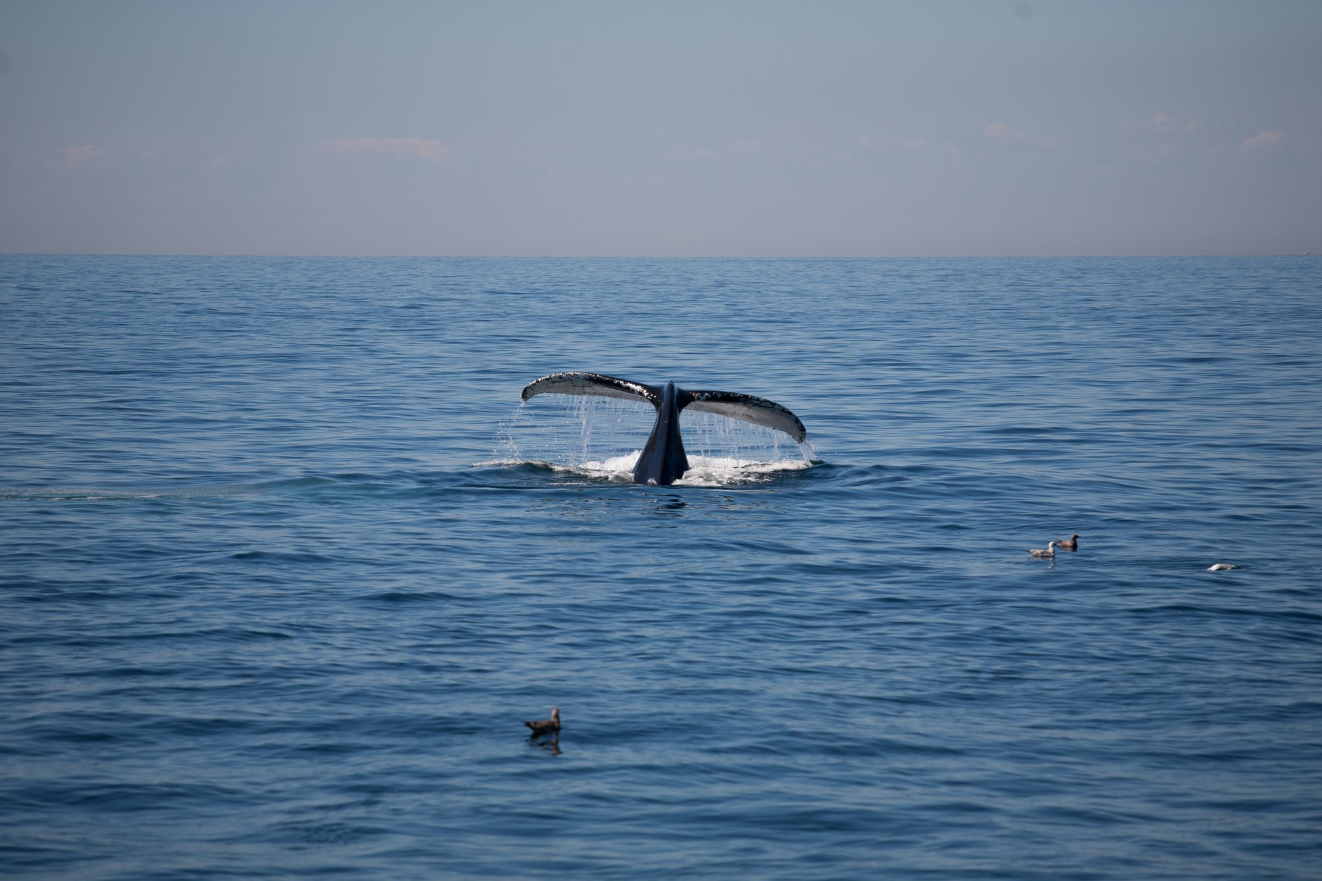 Best time to see Whale Watching 2020