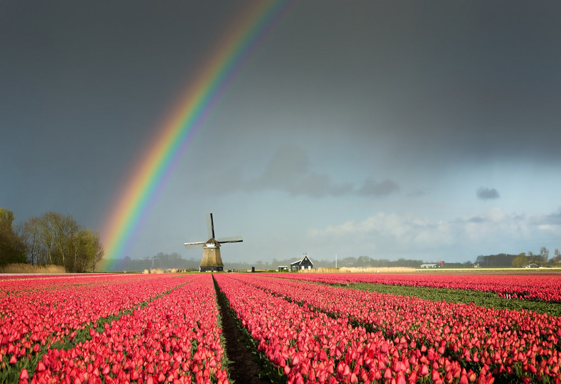 Best time for Keukenhof (Garden of Europe) 2020