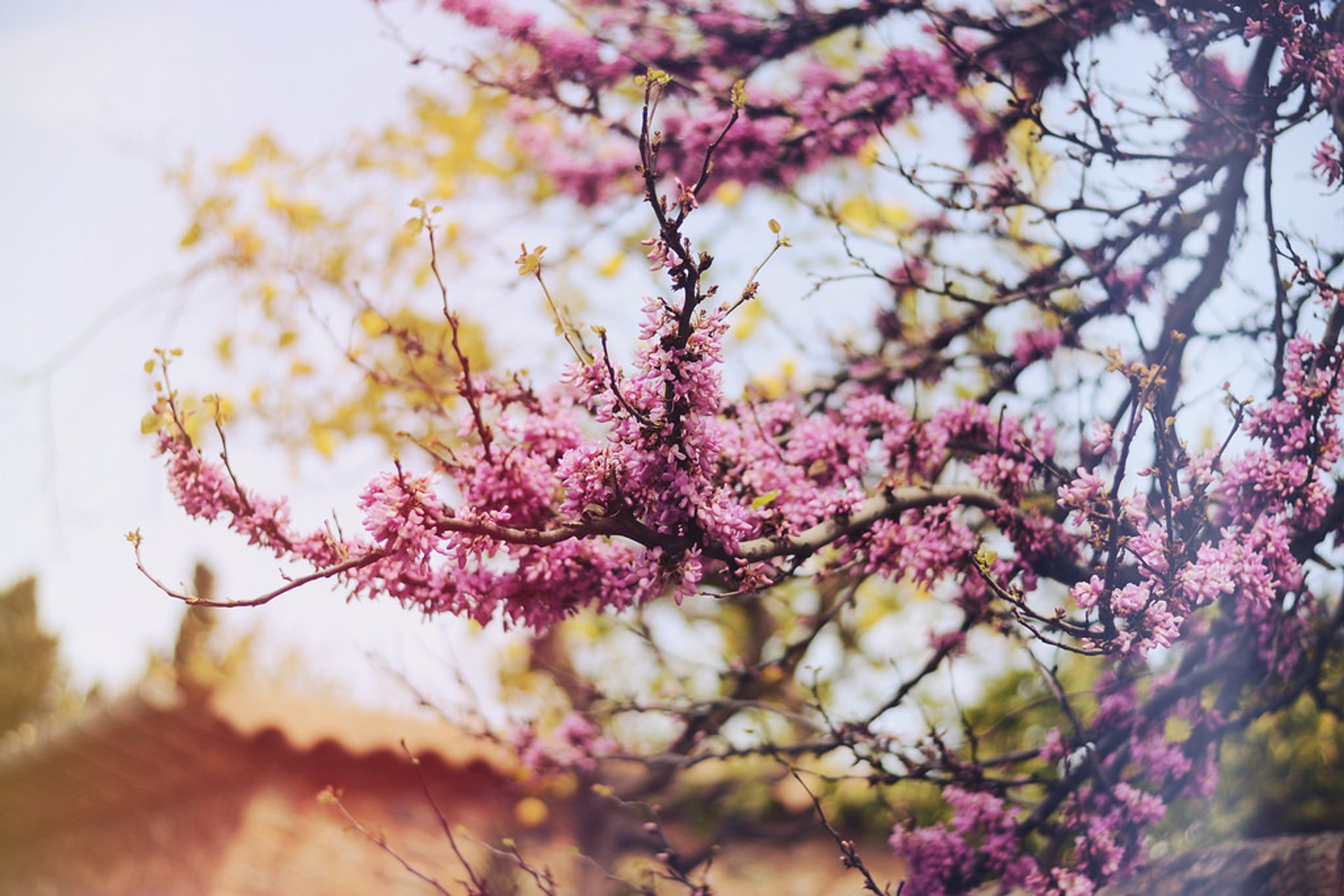 Almond Trees Blossom in Mallorca - Best Season 2020