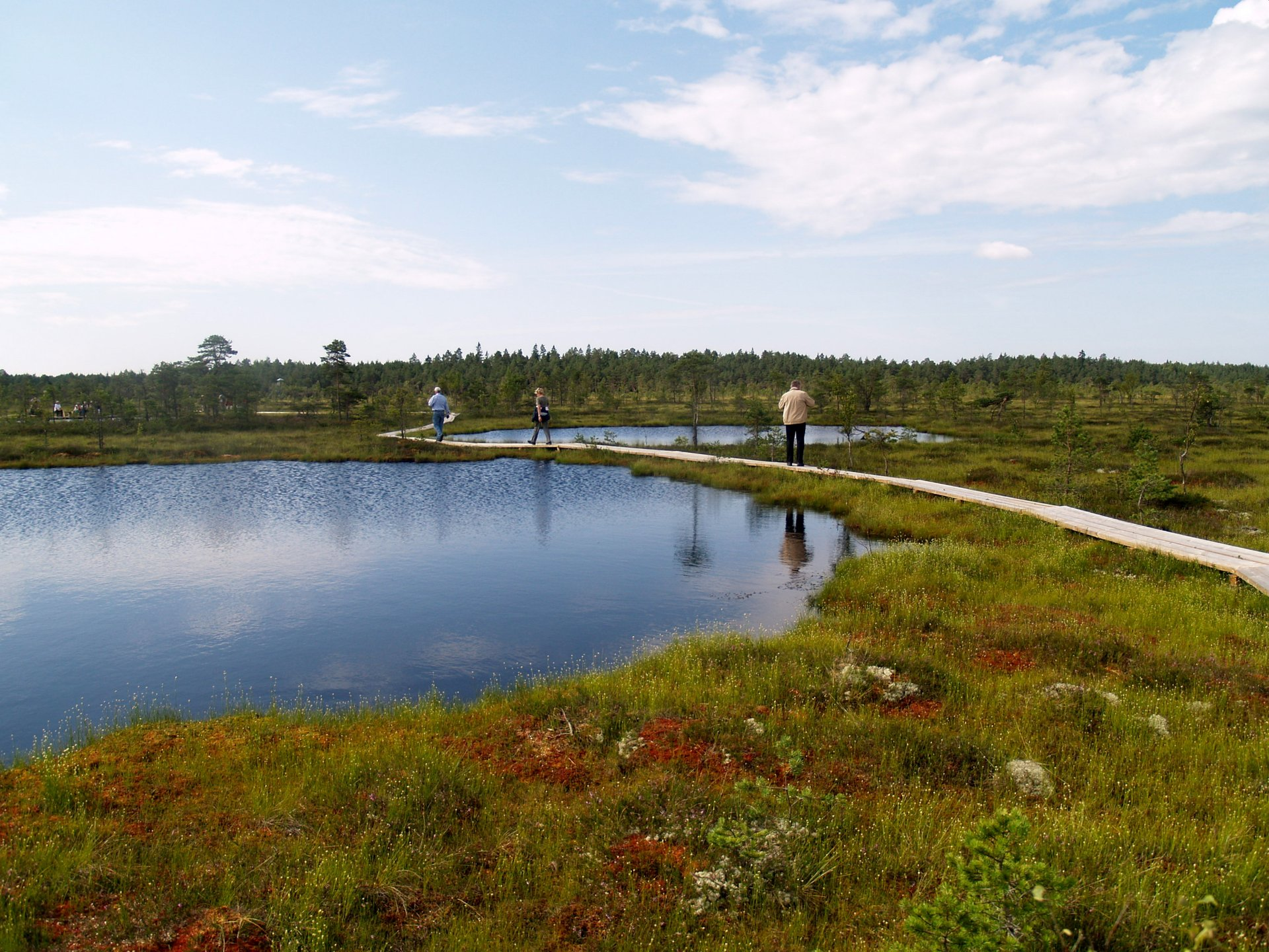 Bogs in the Soomaa National Park, the second largest national park in Estonia 2020