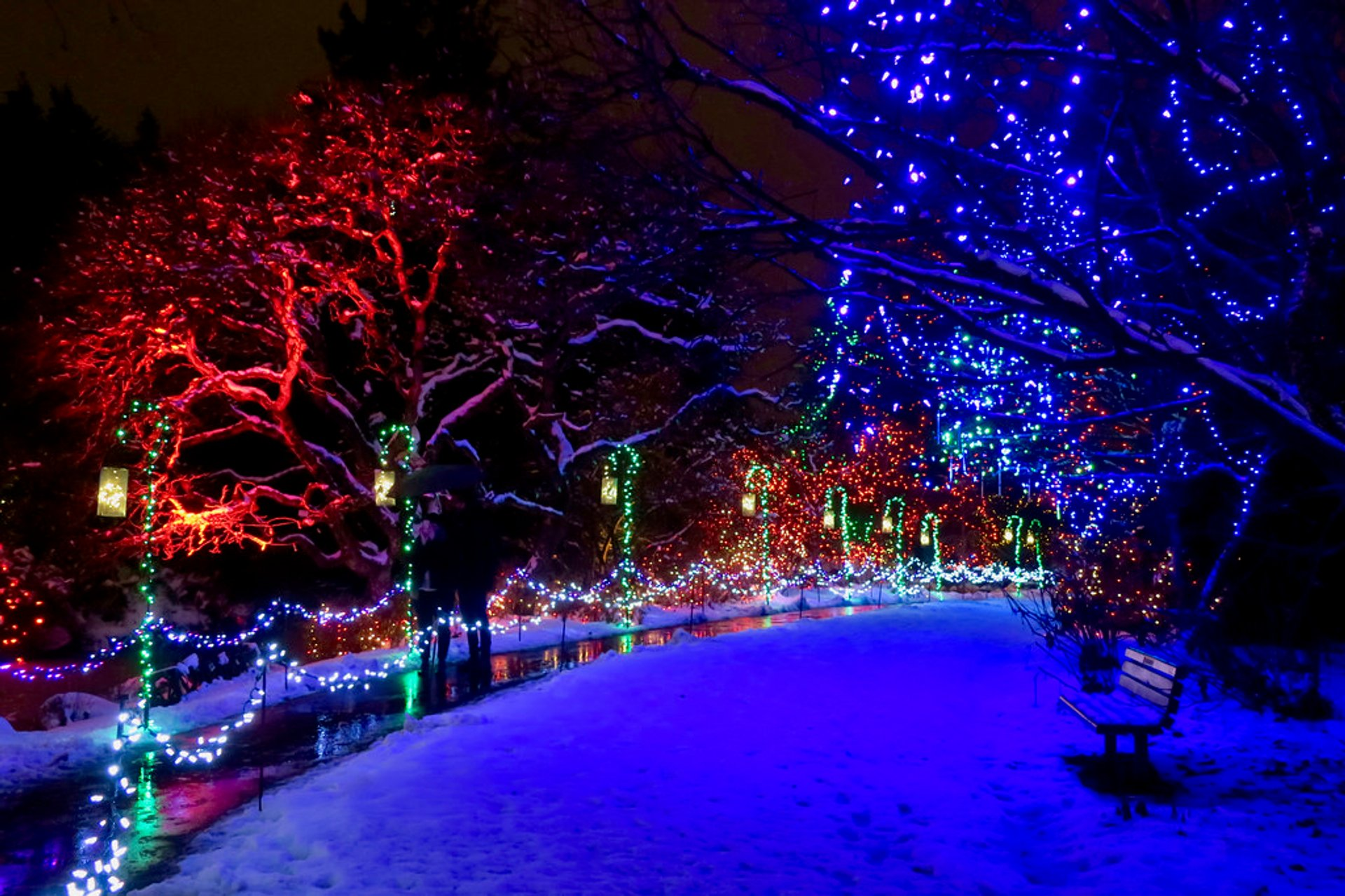 Best time for VanDusen Festival of Lights in Vancouver 2020