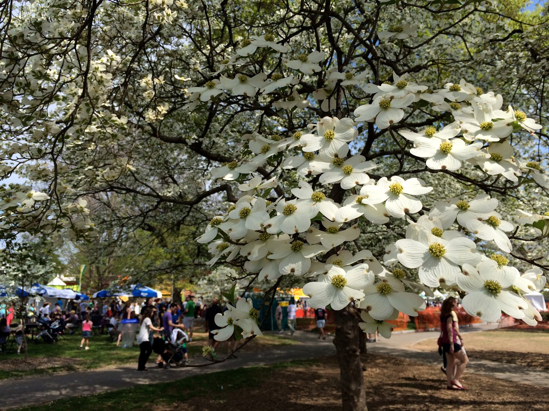 Atlanta Dogwood Festival in Atlanta 2020 - Best Time
