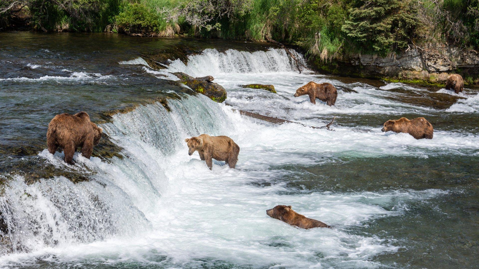 Bear Watching in Alaska 2020 - Best Time