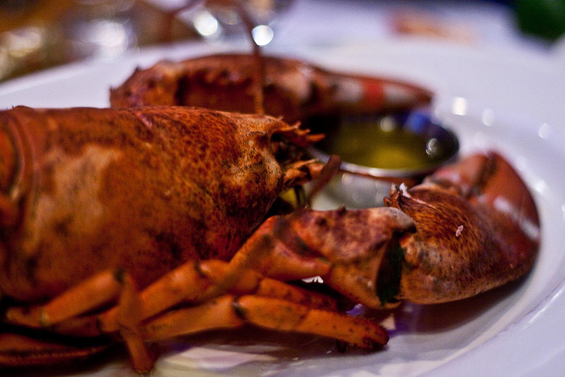 Lobster in Boston - Best Season