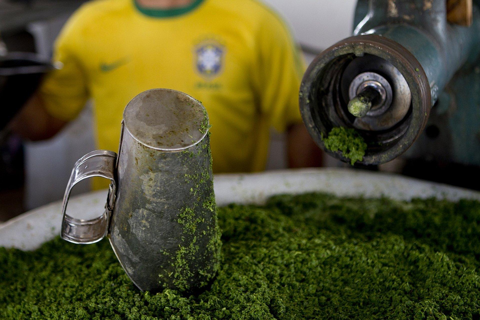 Maniçoba in Brazil - Best Time