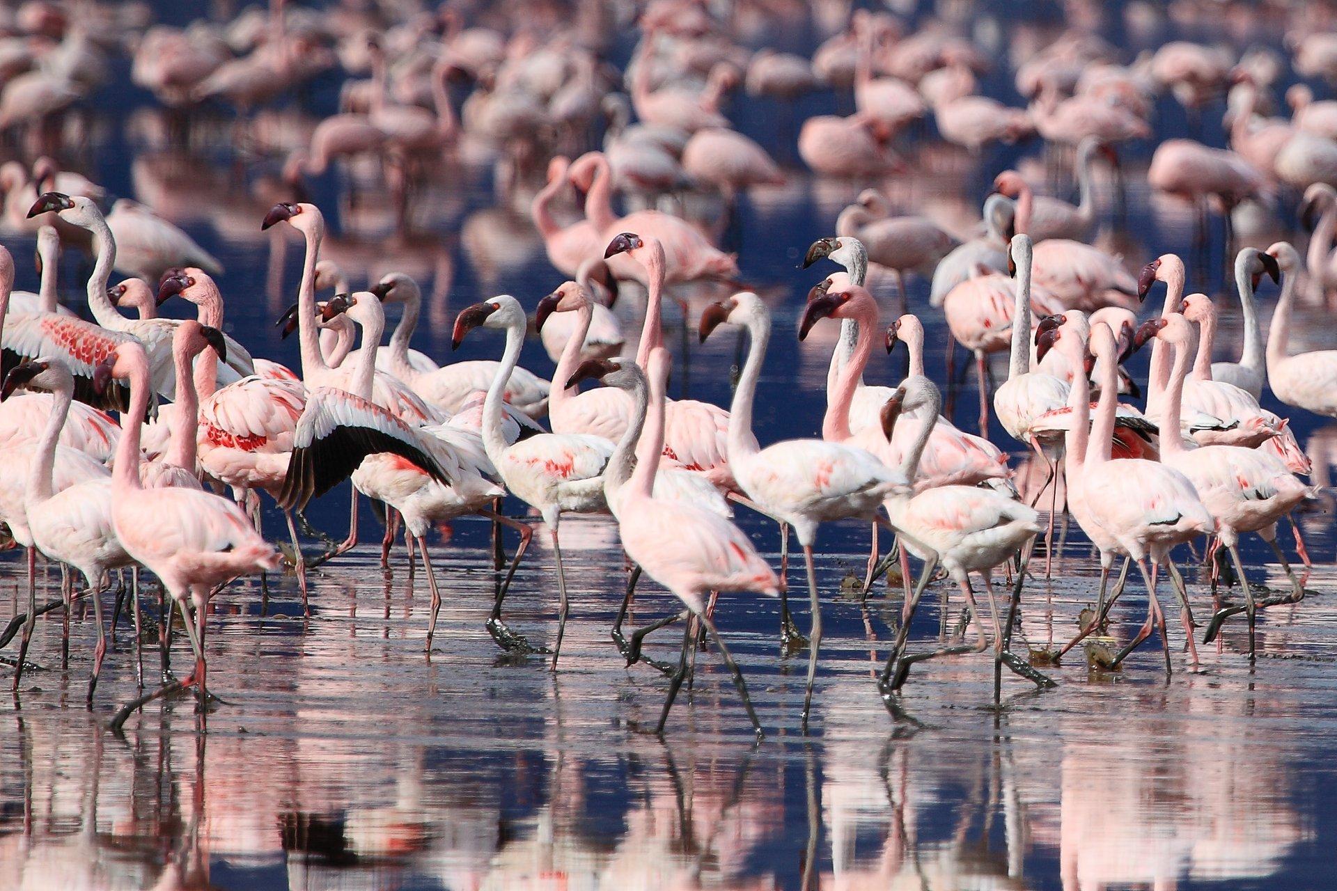 Flamingos in Tanzania 2019 - Best Time