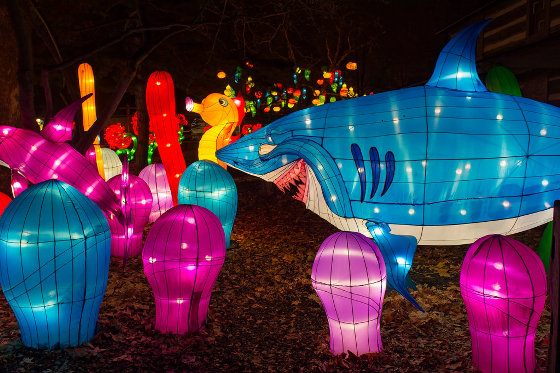 Best time for Dragon Lights Columbus in Midwest 2020
