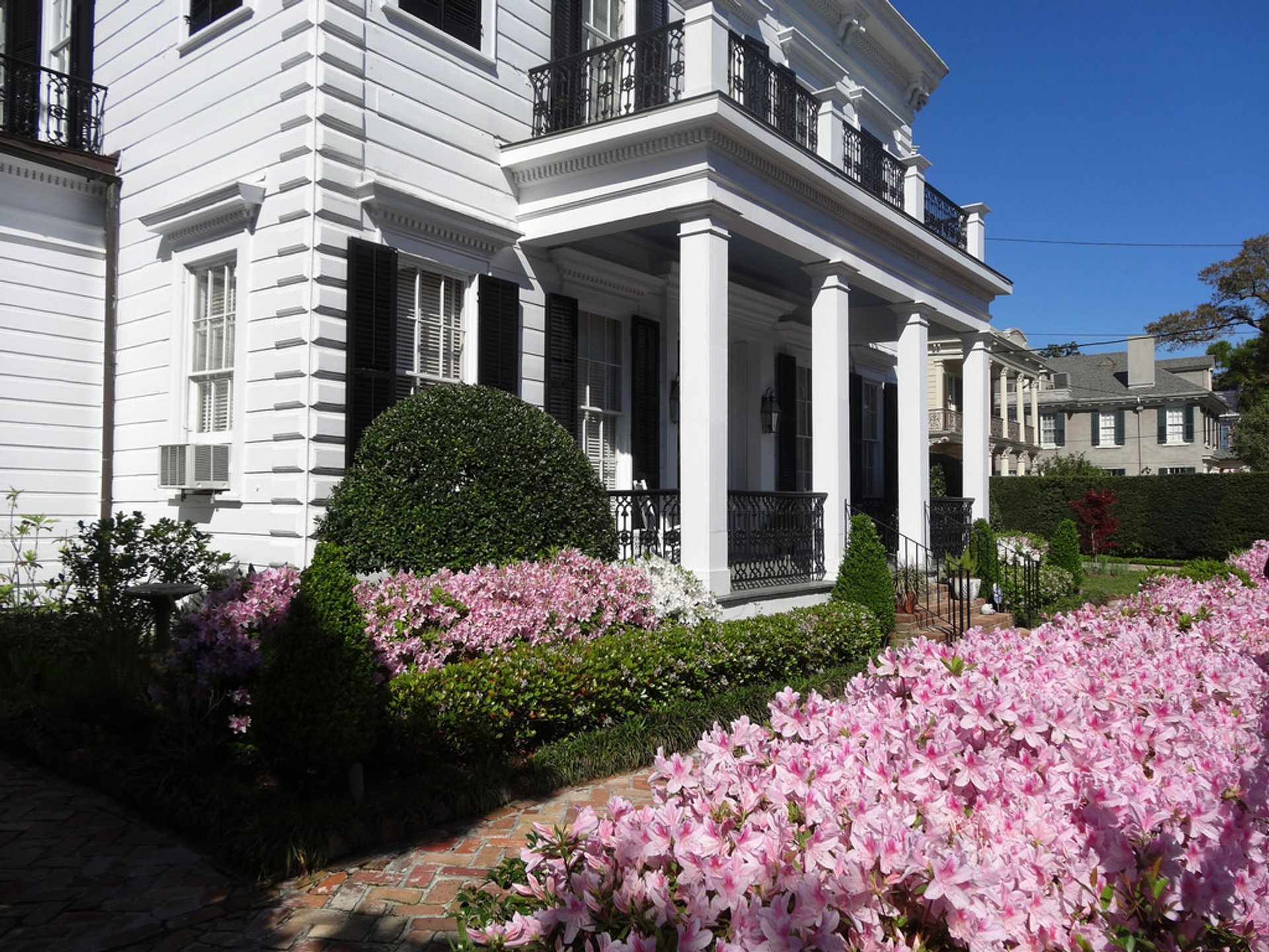 Azaleas in New Orleans - Best Season