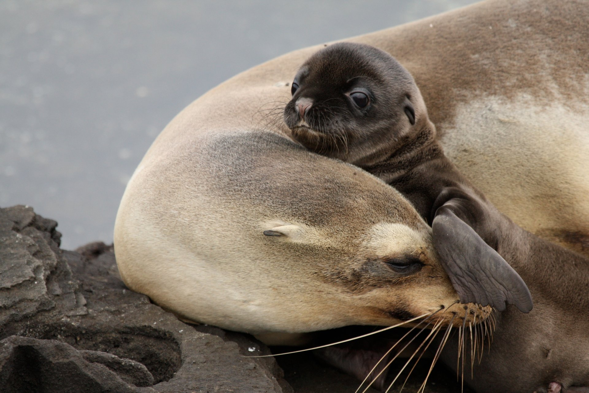 Sea Lion Baby and Mom 2020