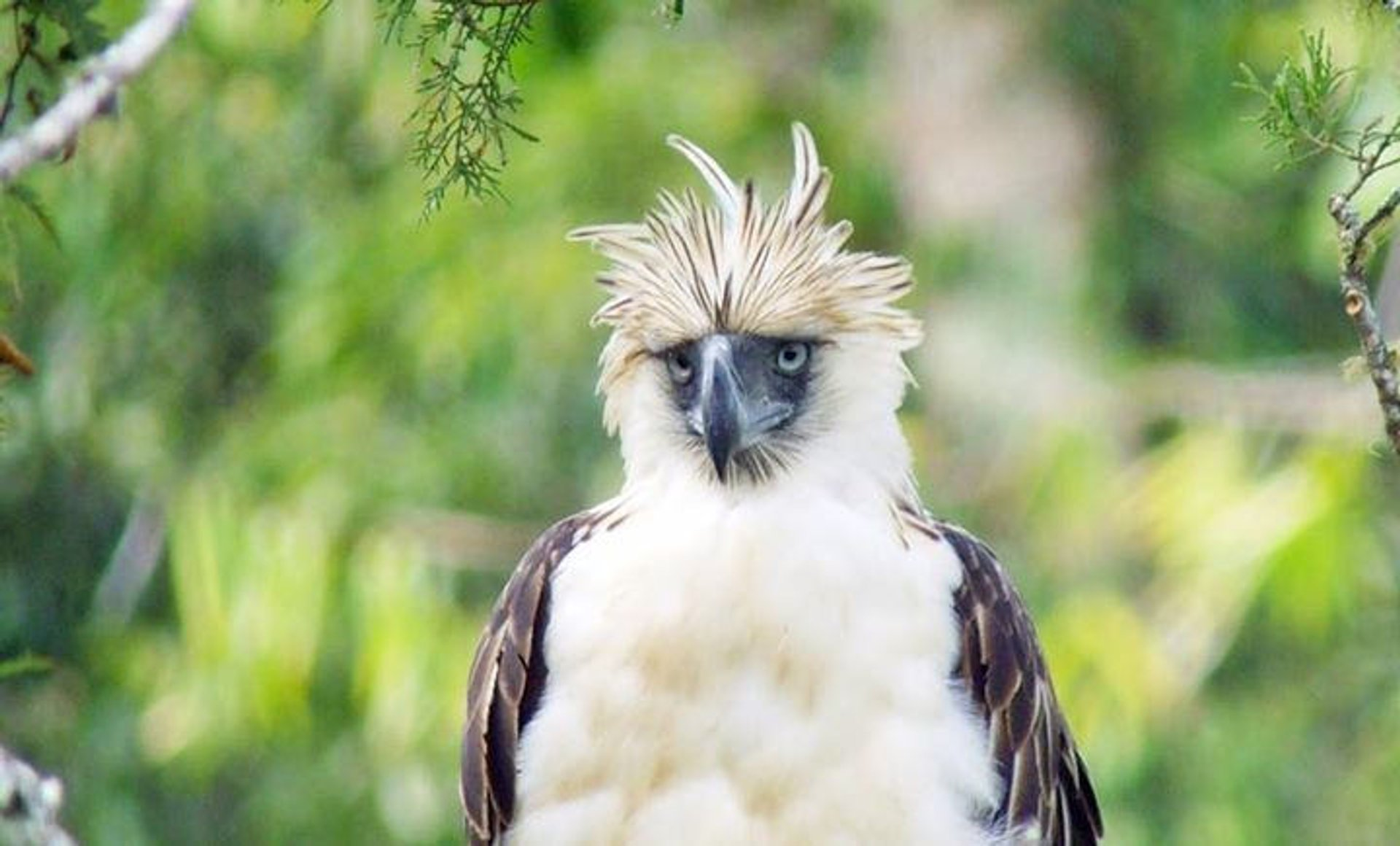 Philippine Eagle in Philippines - Best Time
