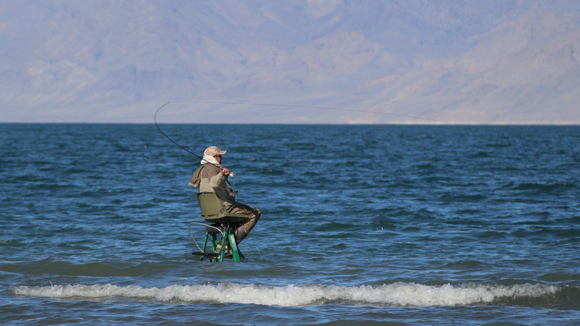 Fishing at Pyramid Lake in Nevada - Best Season 2020
