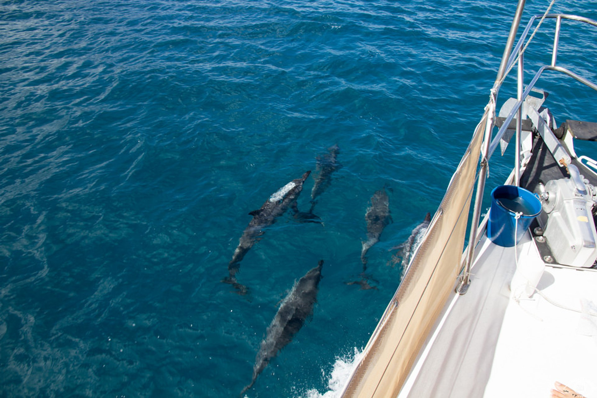 Dolphin Watching in Tahiti 2019 - Best Time